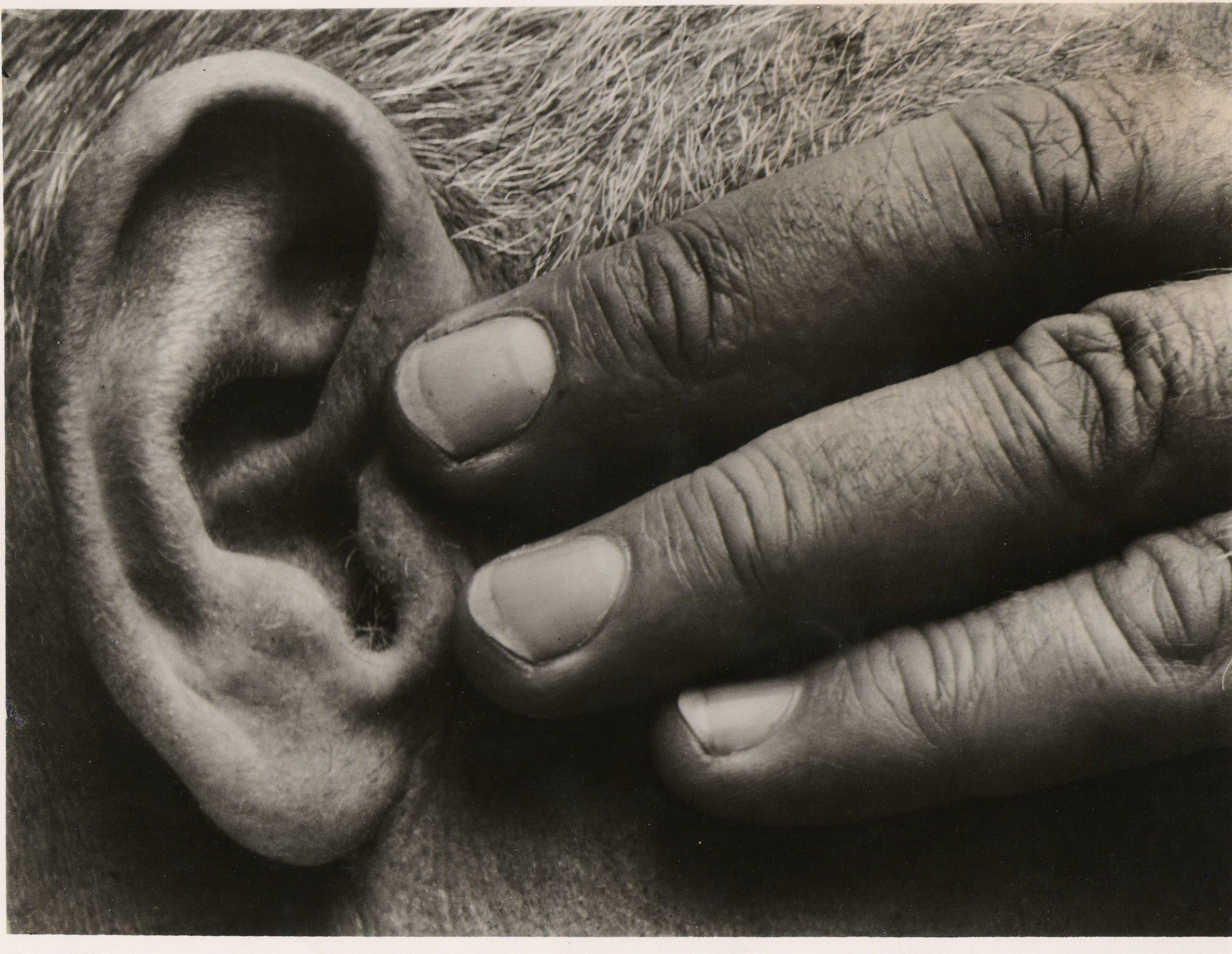 Brett Weston:  Ear and Hand, later MOMA press print.