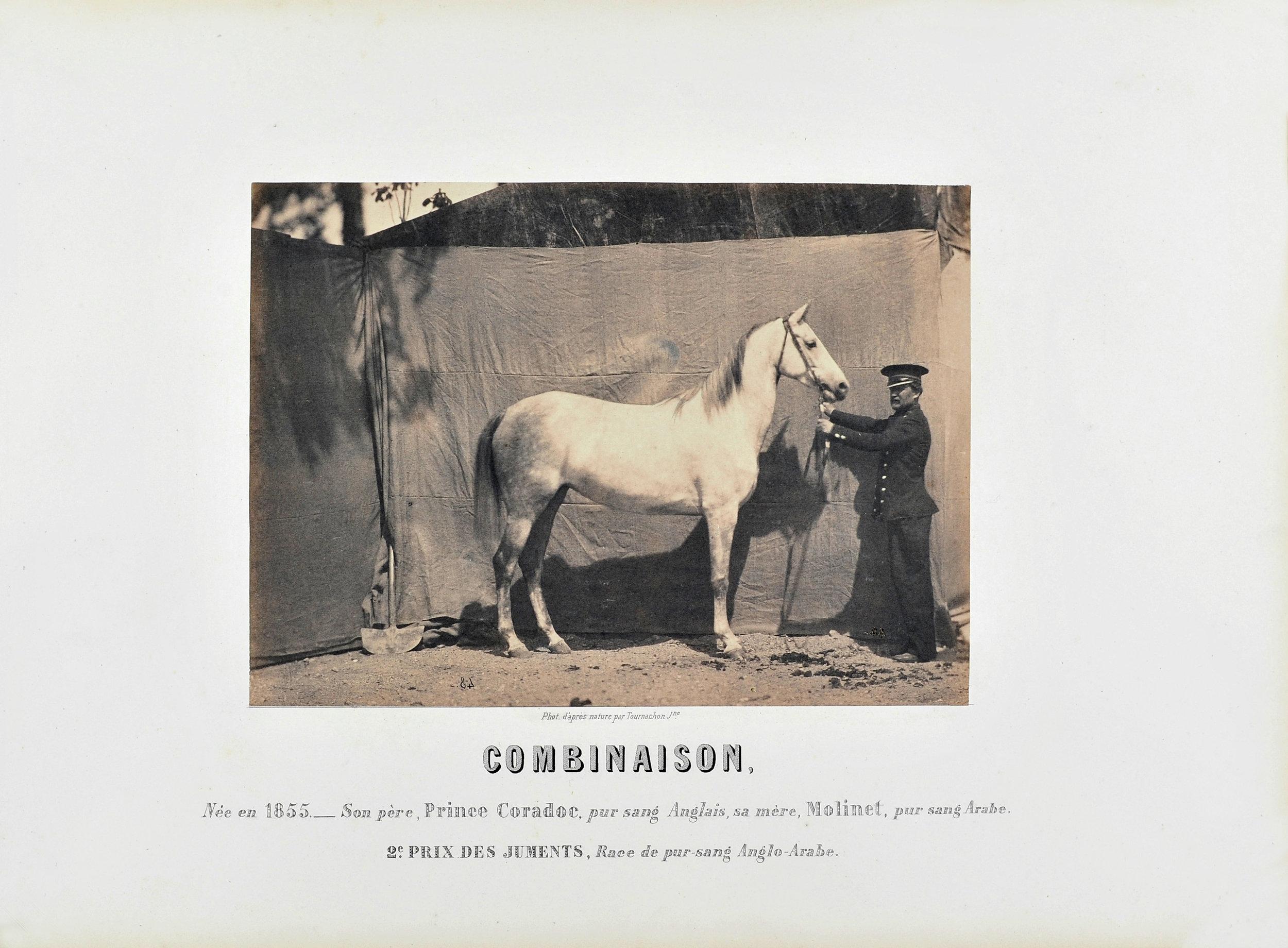 """Adrien TOURNACHON (1825-1903) """"Combinaison"""", 2e Prix des juments, c 1860 Salted Paper print, Courtesy L'Atelier D'Artistes"""