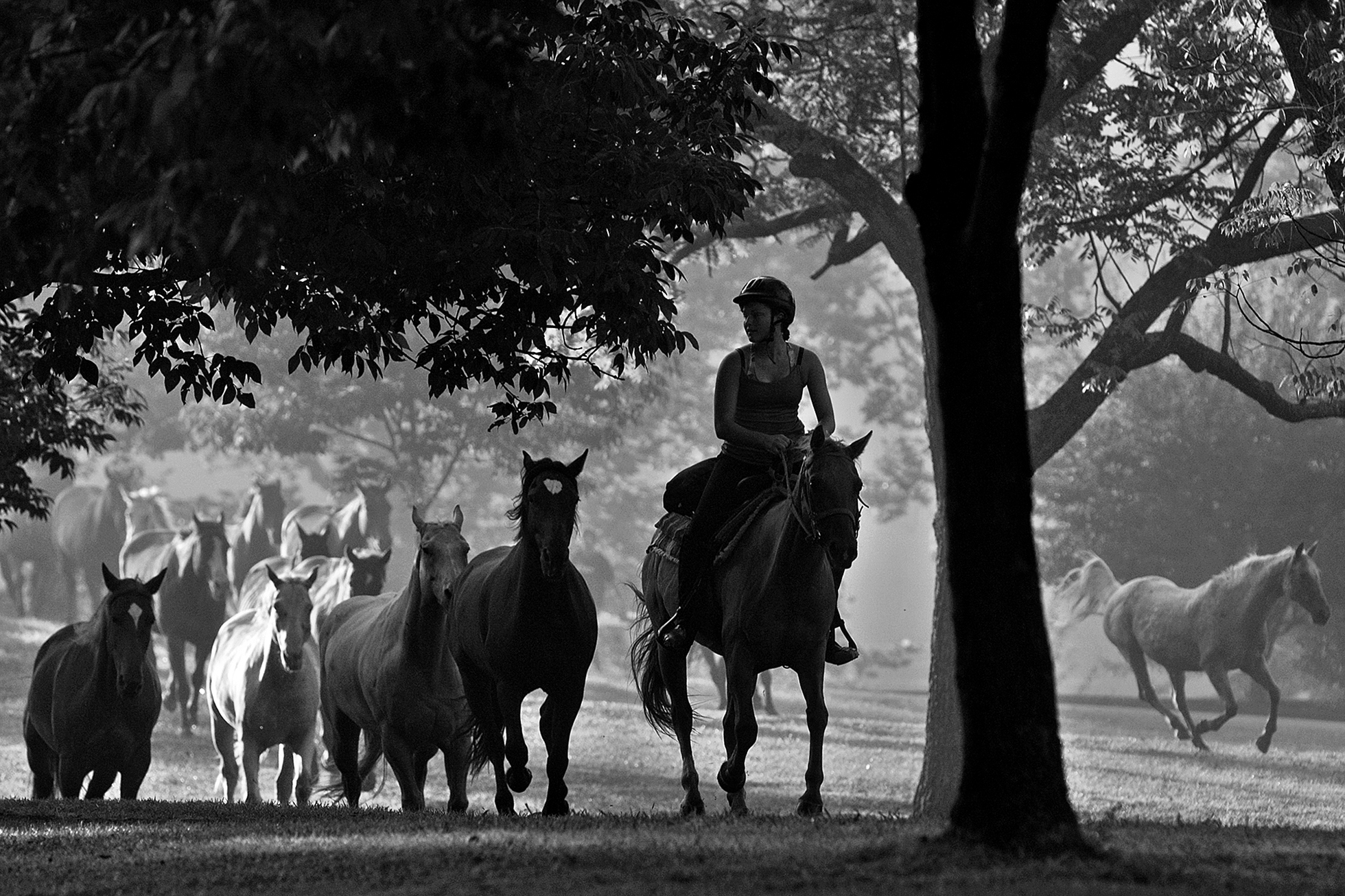 Before the campers at Camp Carson in Princeton woke in the morning, Leah Miller of Jasper stampeded the 16 horses from the pasture up through camp to the barn to begin getting them ready for the day.