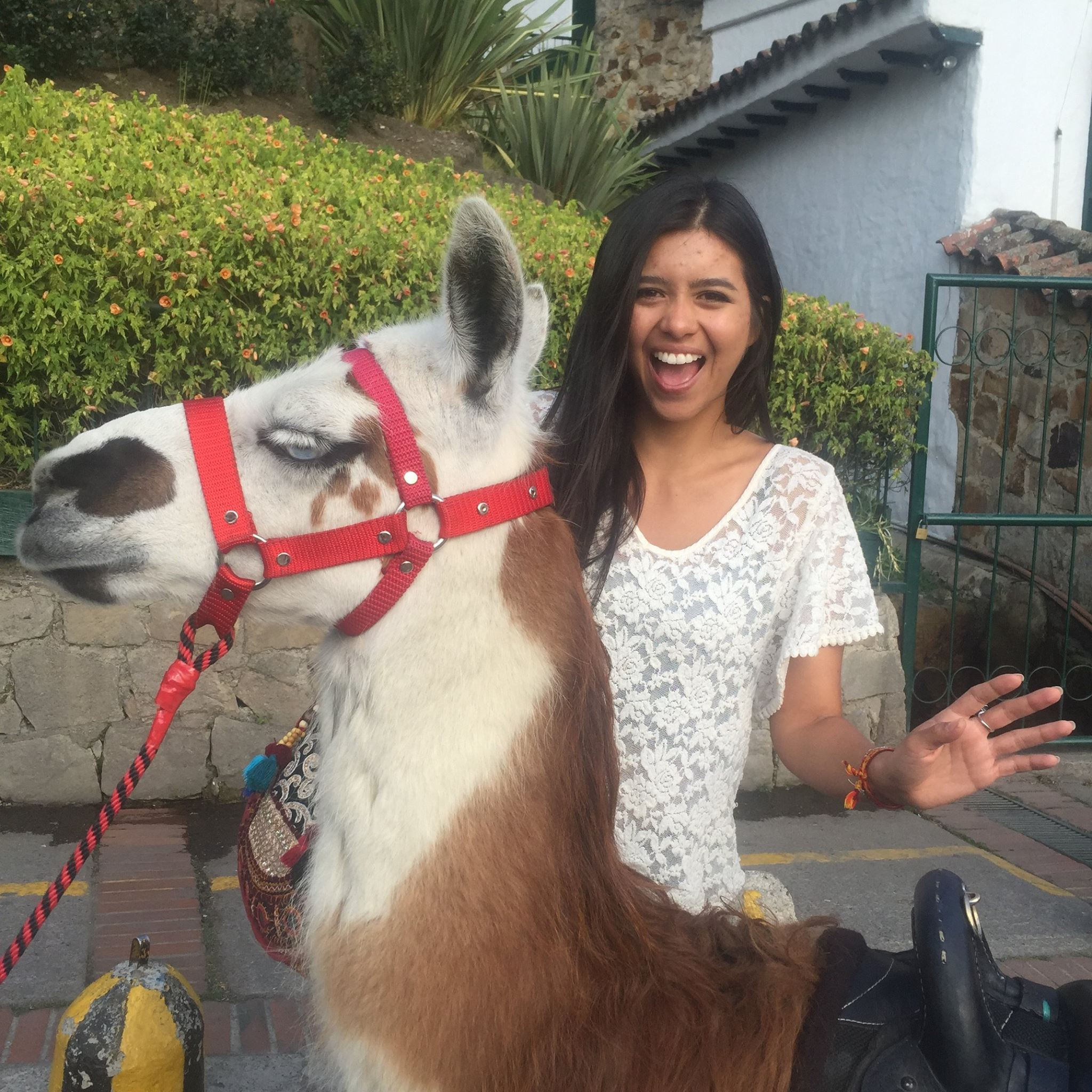 My friend Natalia & our amused llama friend at the entrance to Monserrate.