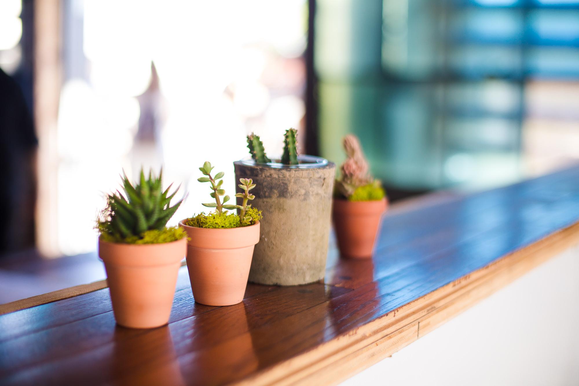 Mini terracotta pots