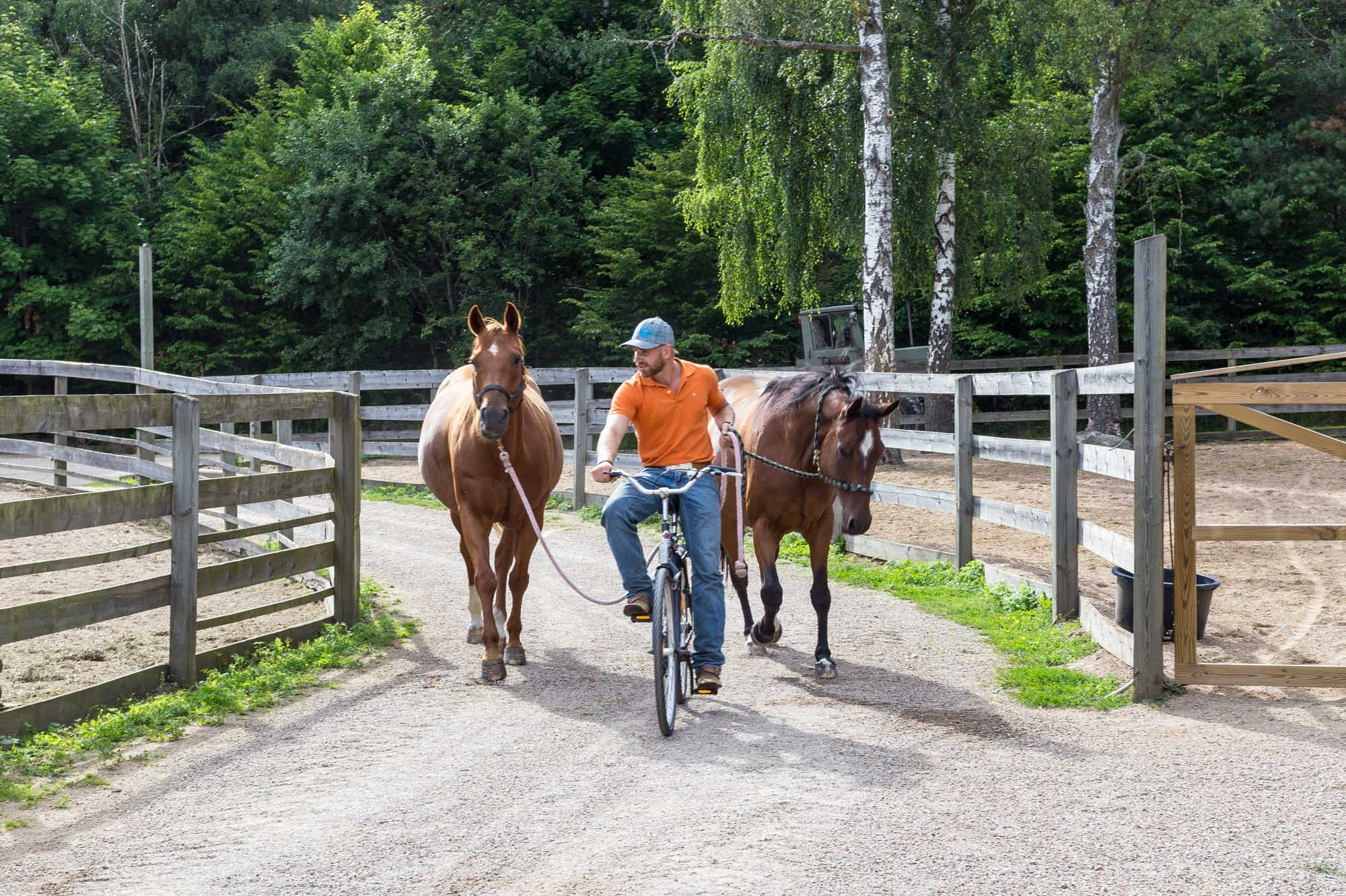 Anton is bringing the horses for the girls. He is one of the best westernstyle riding instructor in Sweden.