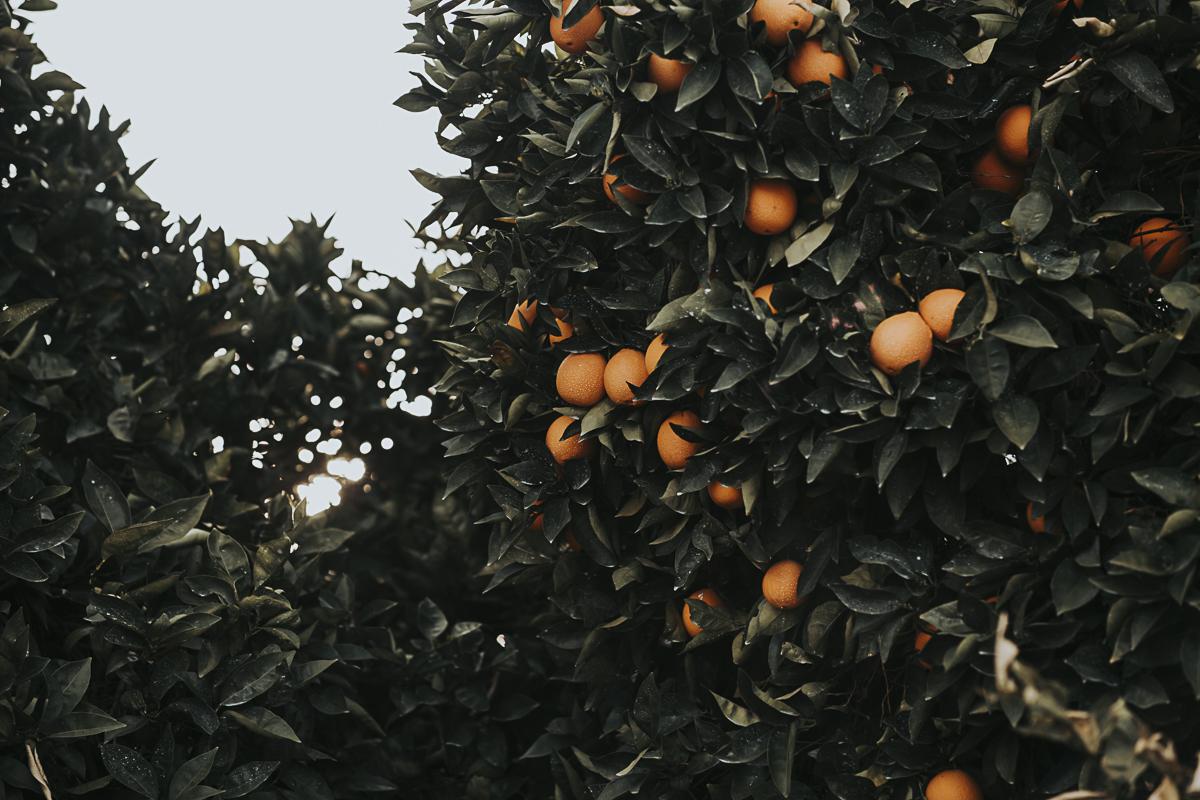 oranges_lr-2.jpg