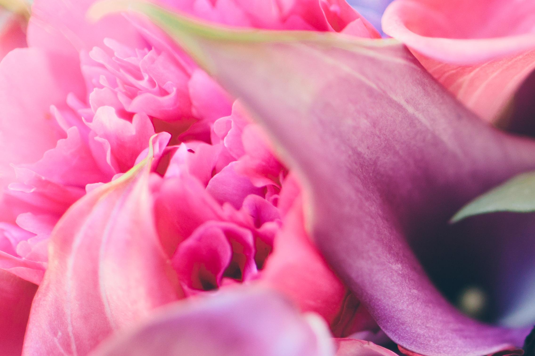 Flowers(48).jpg