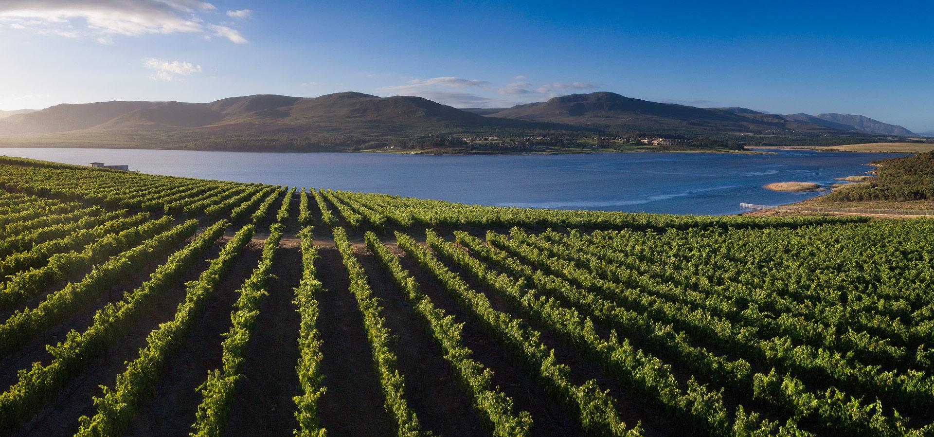 Vineyard and views (2).jpg