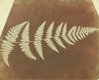 William_Henry_Fox_Talbot_(British_-_(Buckler_Fern)_-_Google_Art_Project_400px.jpg
