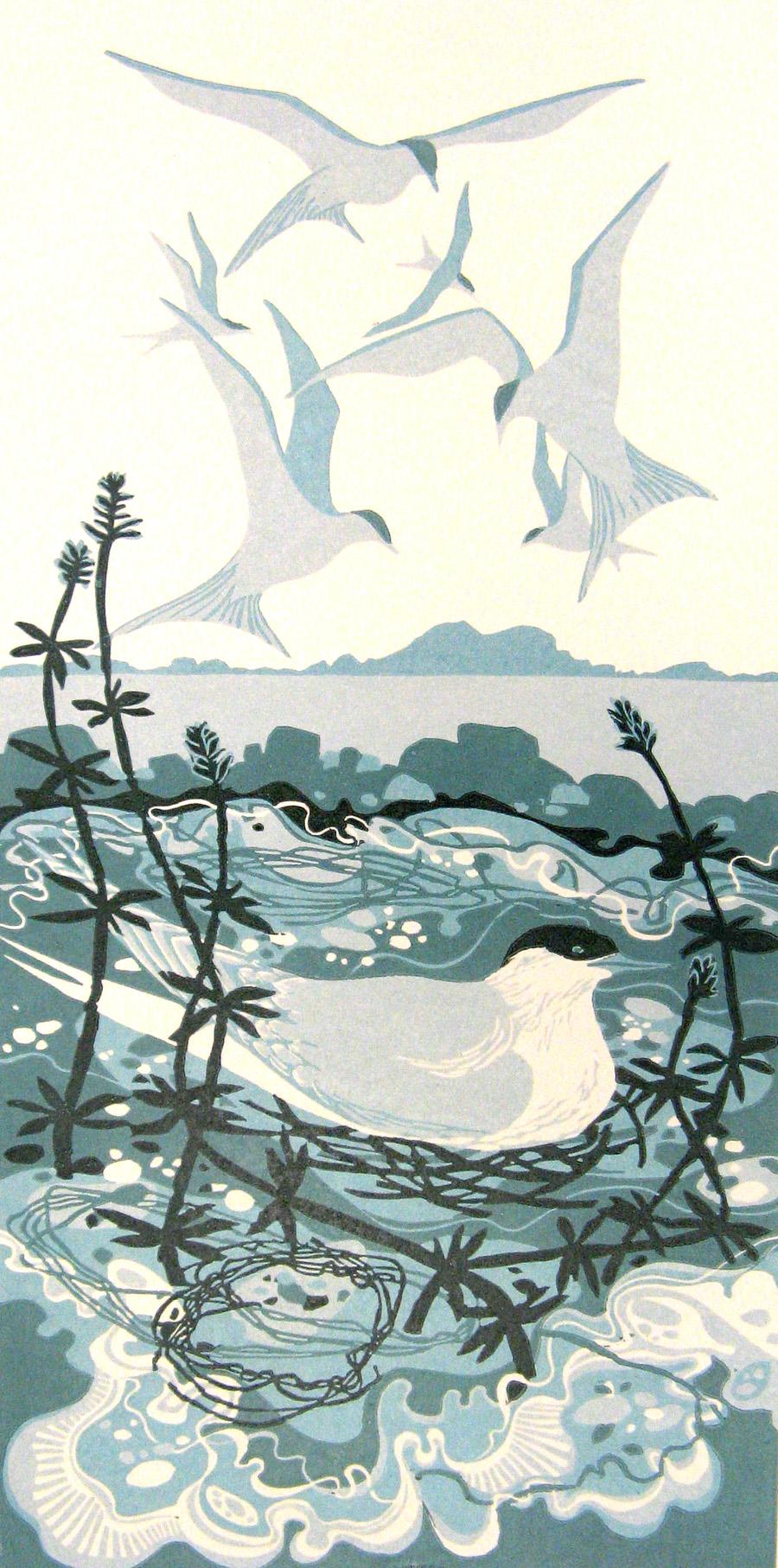 Nesting Terns.jpg