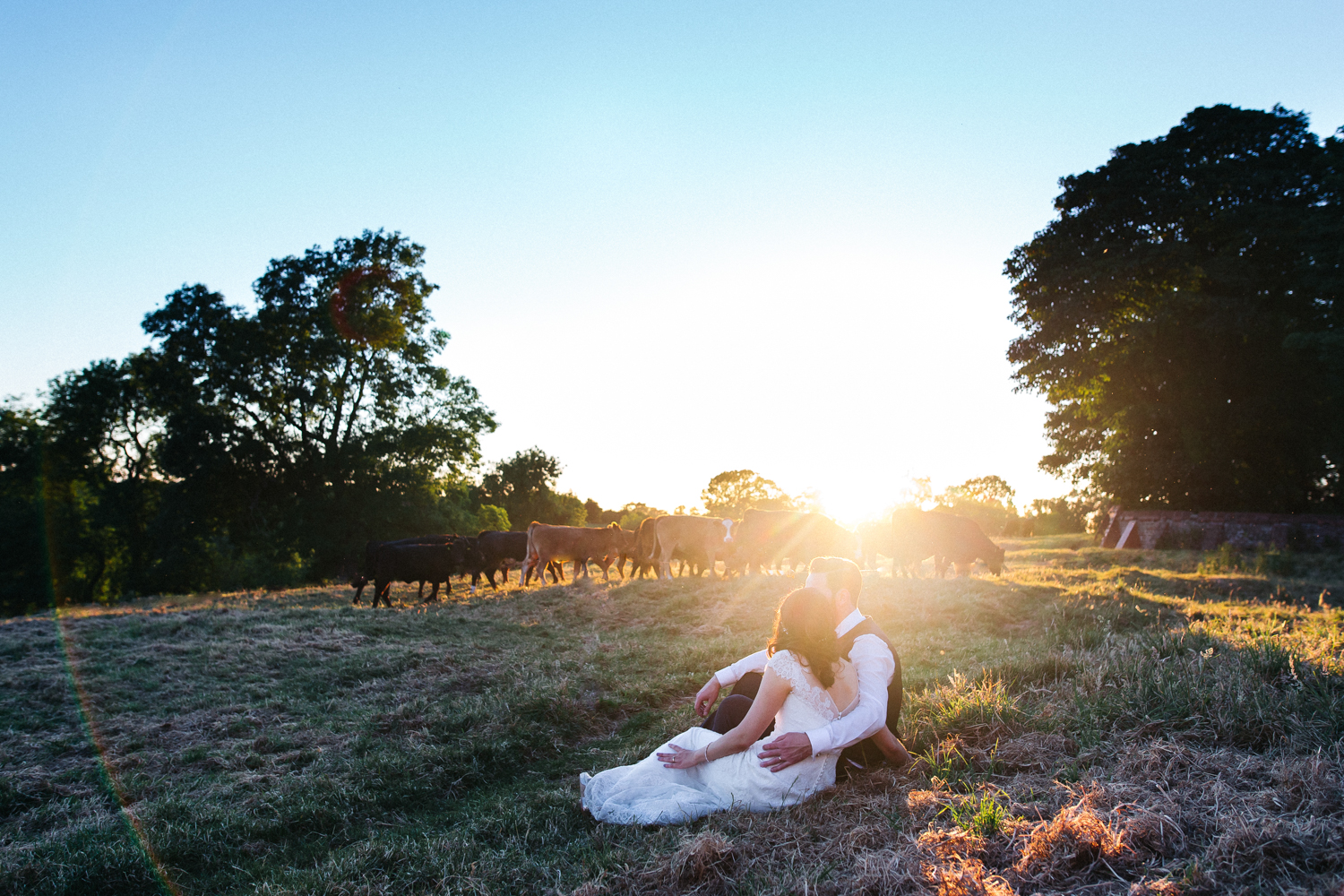a bride and groom sit in golden llight in a field, there are cows in the distance