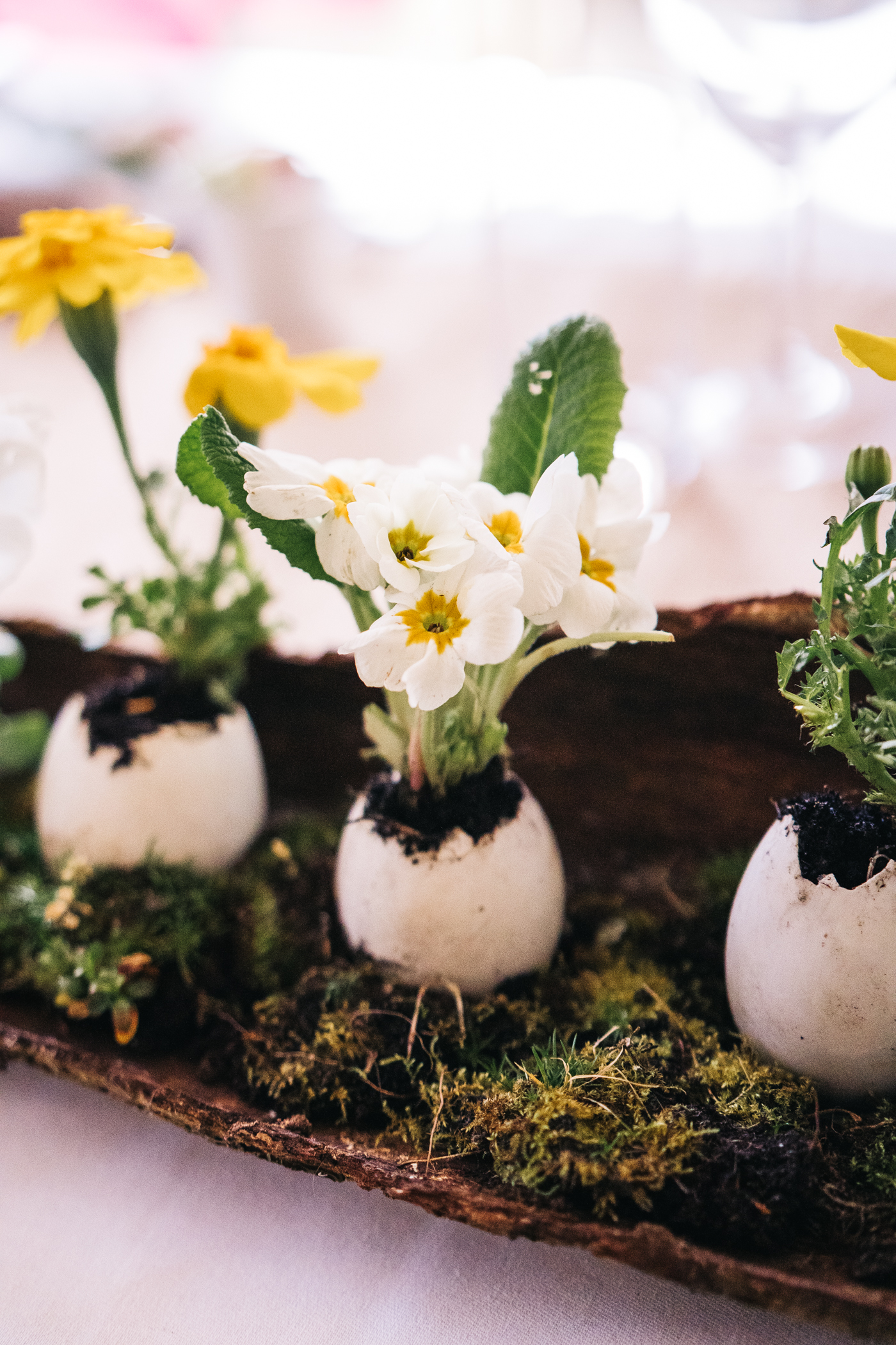 flowers planted in duck eggs as part of the styling. wedding at laskill house north yorkshire helmsley wedding photographer north east teesside