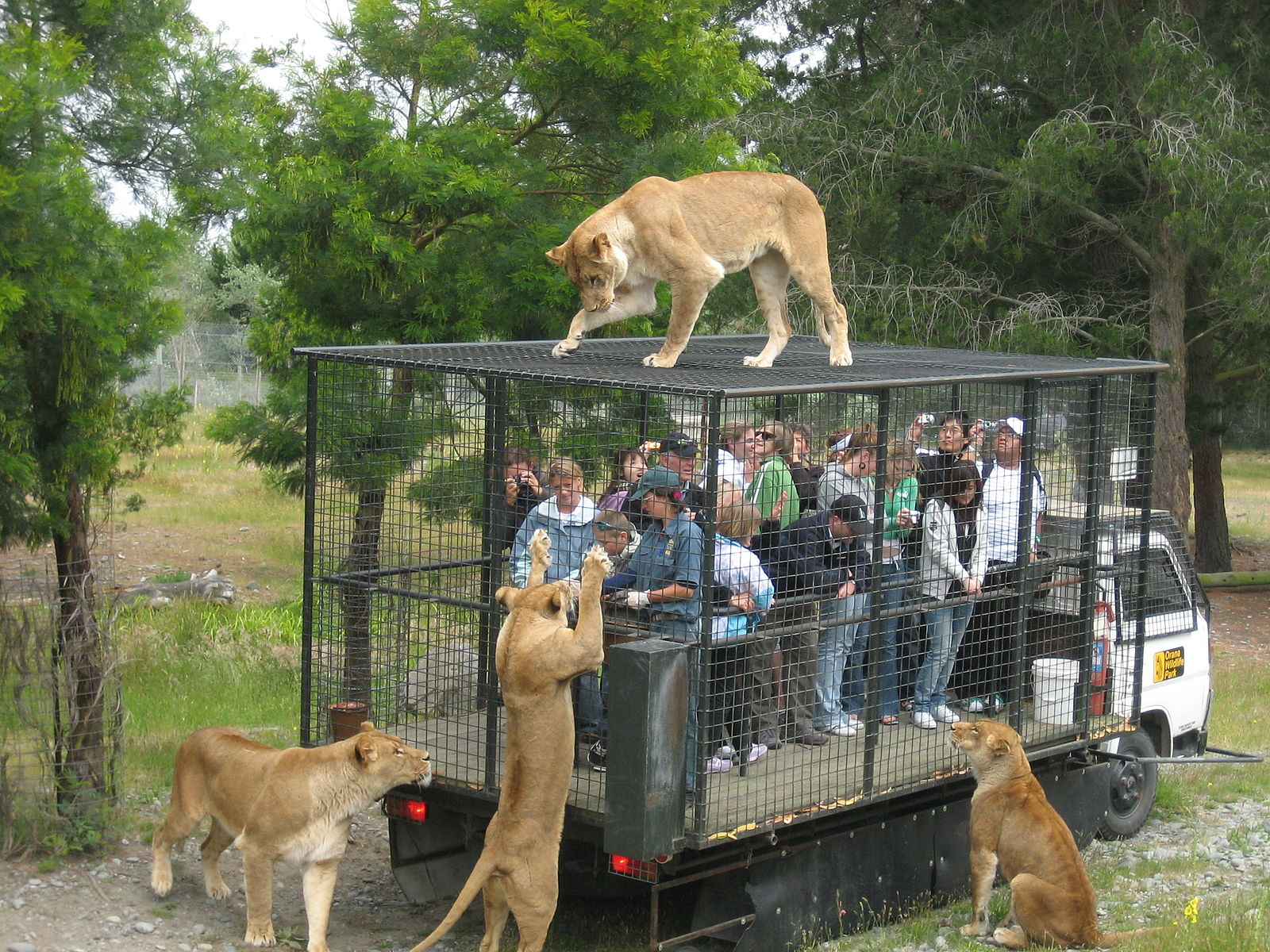 An inverted Zoo. Which are in better health? (Photo CCBY Greg HewGill)