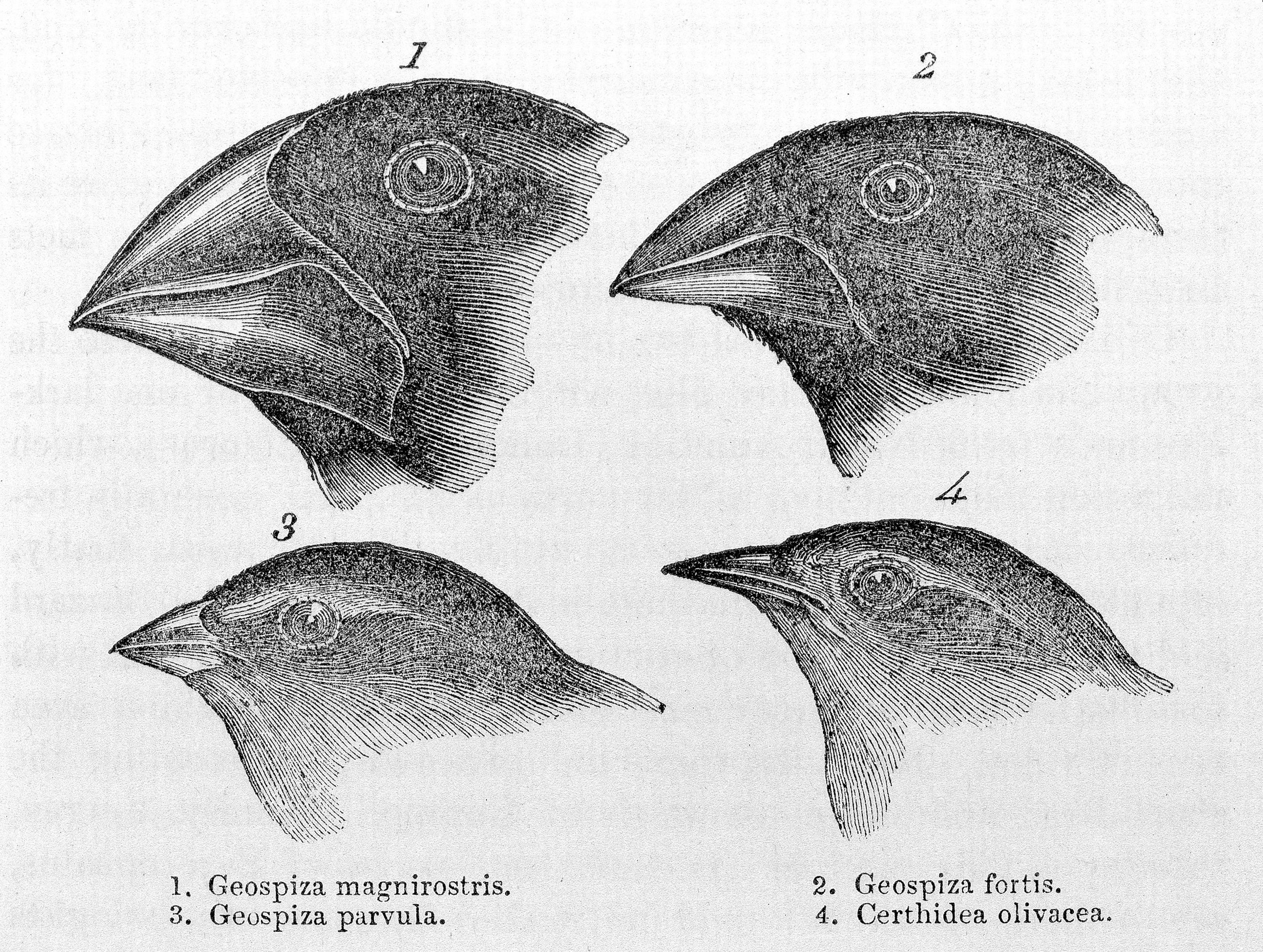 """Source: Charles Darwin. 1845. """"Journal of researches into the geology and natural history of the various countries visited by H.M.S. Beagle."""""""