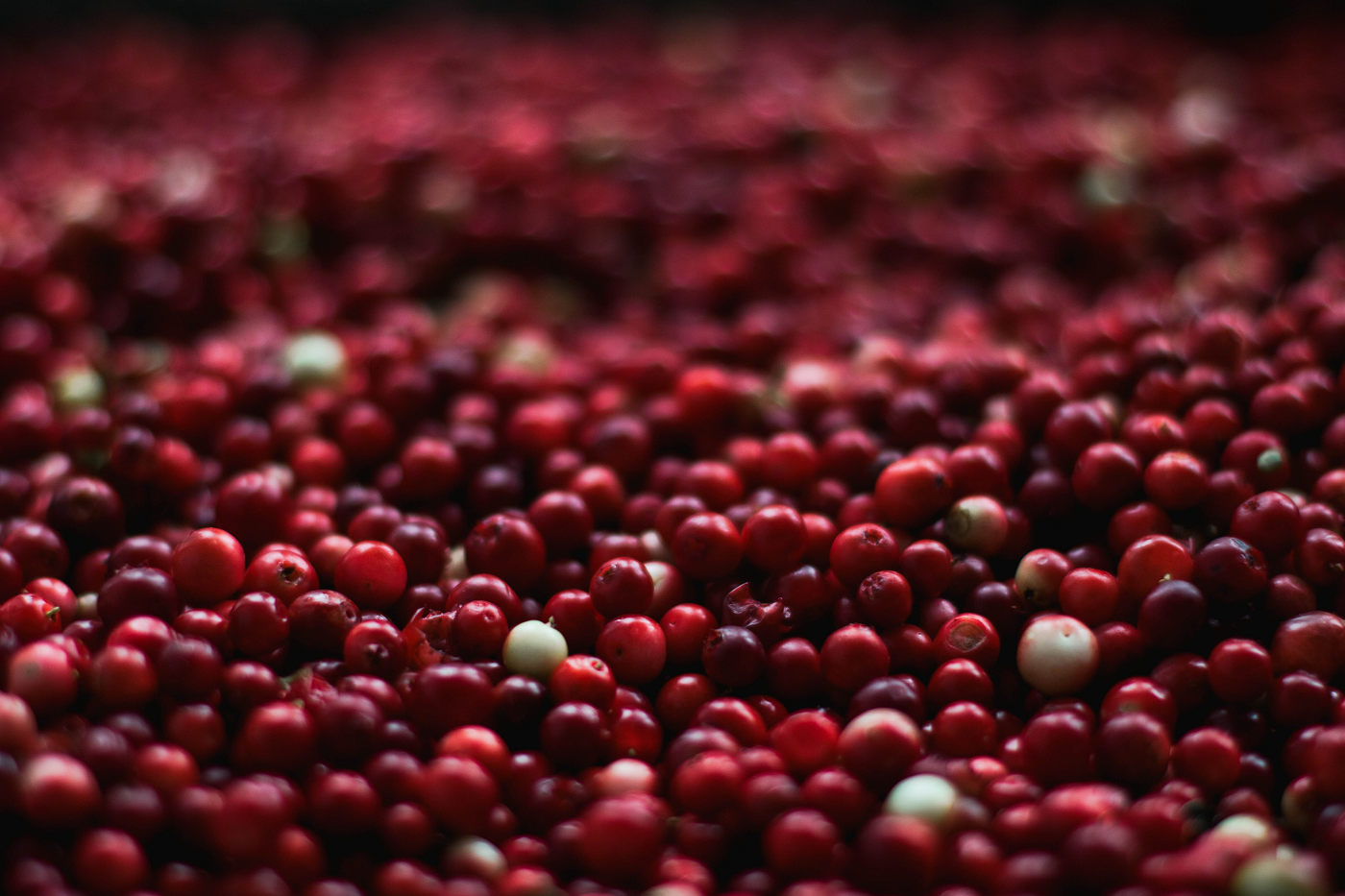 Curbing your appetite (and losing weight) with cranberries