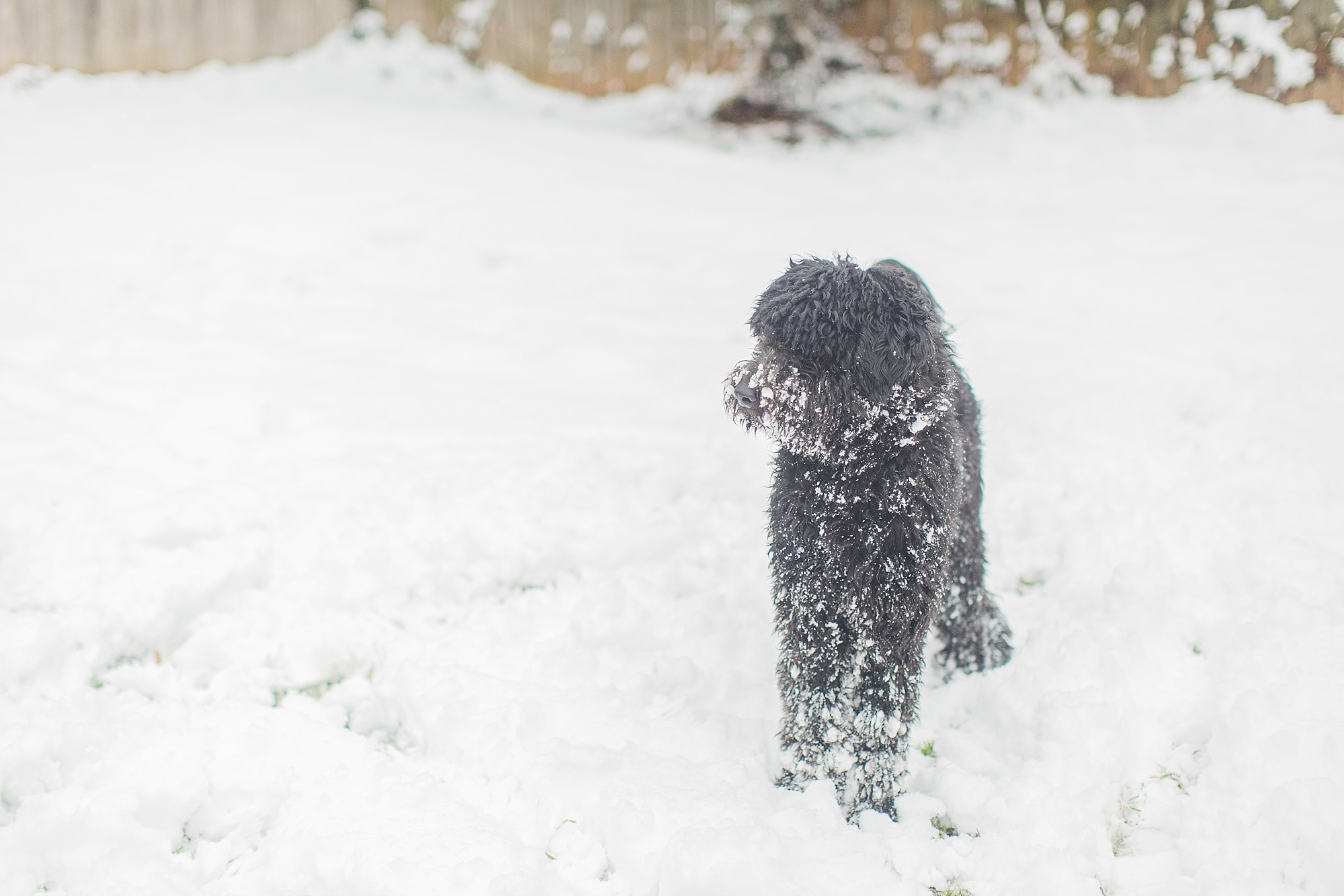 mississippi-snow-day_0014.jpg