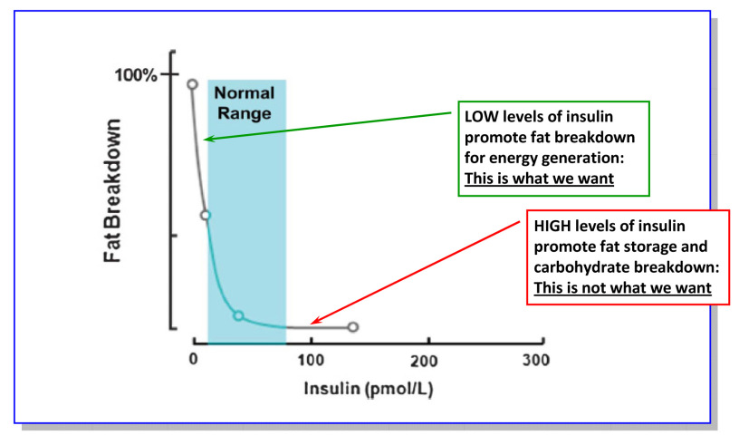 Graph Showing the fat storage effect insulin has on the body. Keep insulin and blood sugar low and keep burning fat! Graph Credit: http://eatingacademy.com/wp-content/uploads/2011/11/Relationship-between-insulin-and-fat-metabolism.jpg