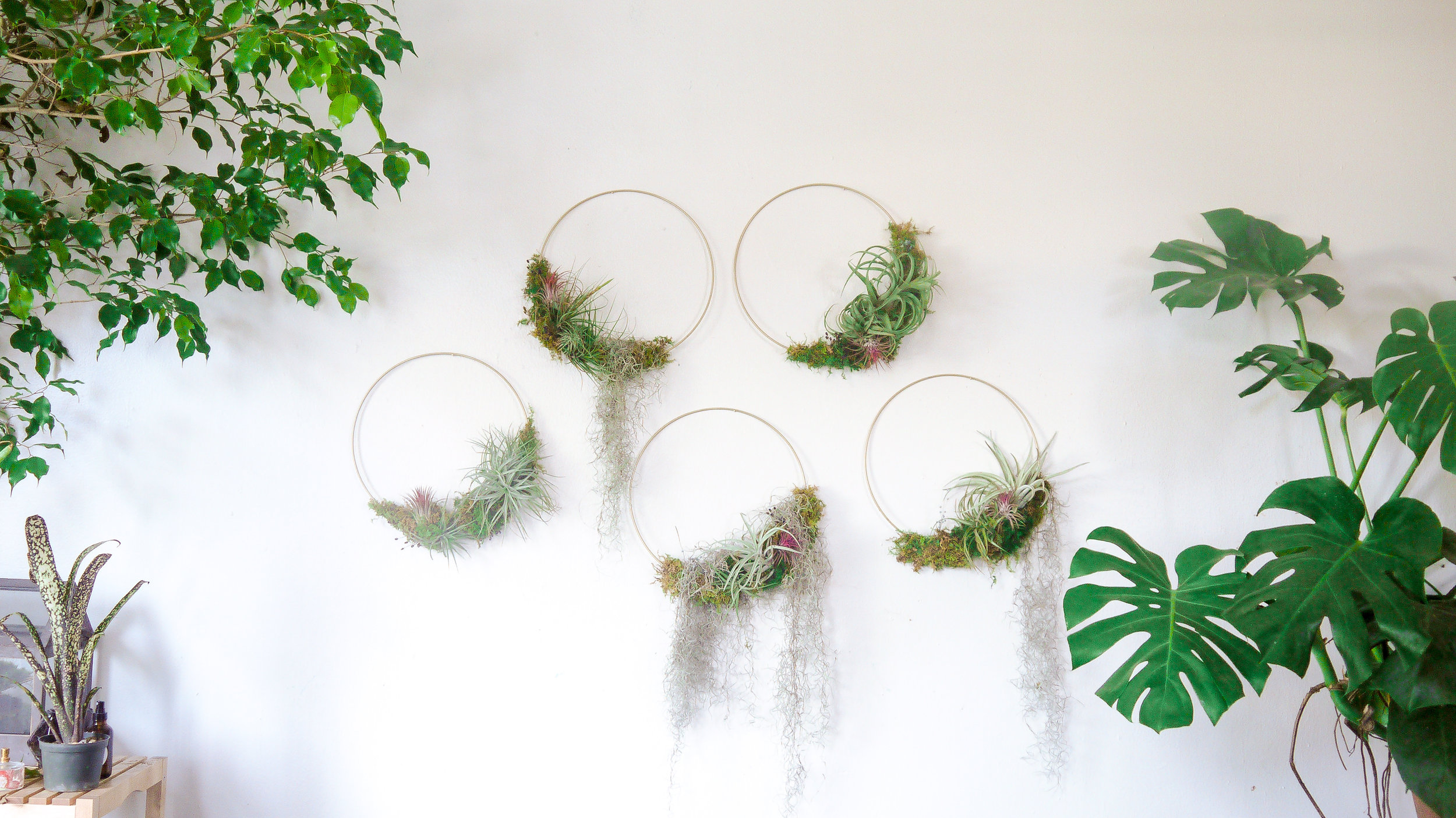 Modern Tillandsia Wreath Workshop - Learn how to craft a modern Tillandsia wreath.  This minimal wreath style incorporates preserved moss, dried flowers and live Tillandsias (air plants).