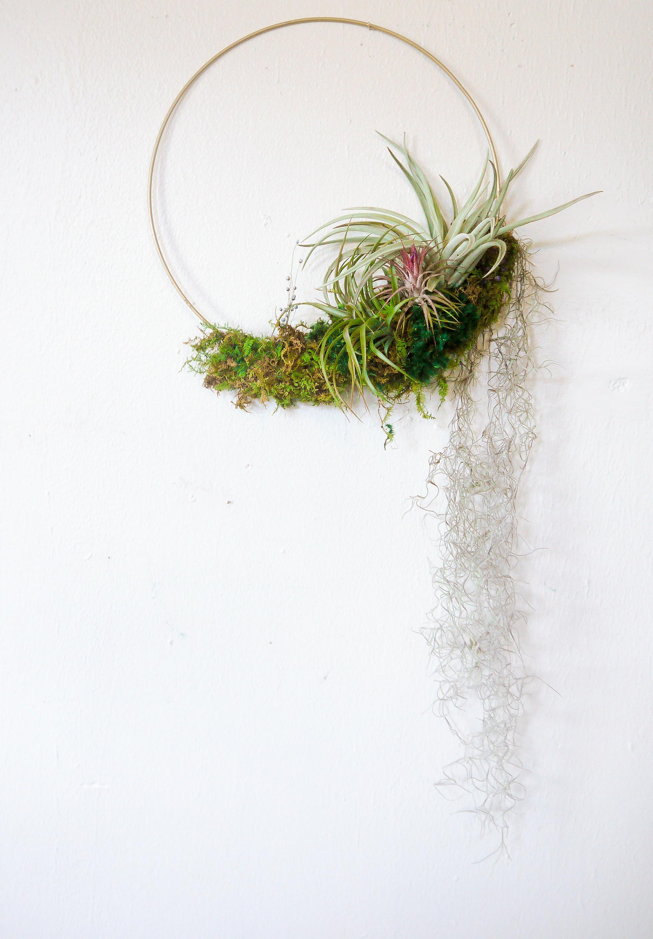 Air Plant Wreath w- Spanish Moss-2.jpeg