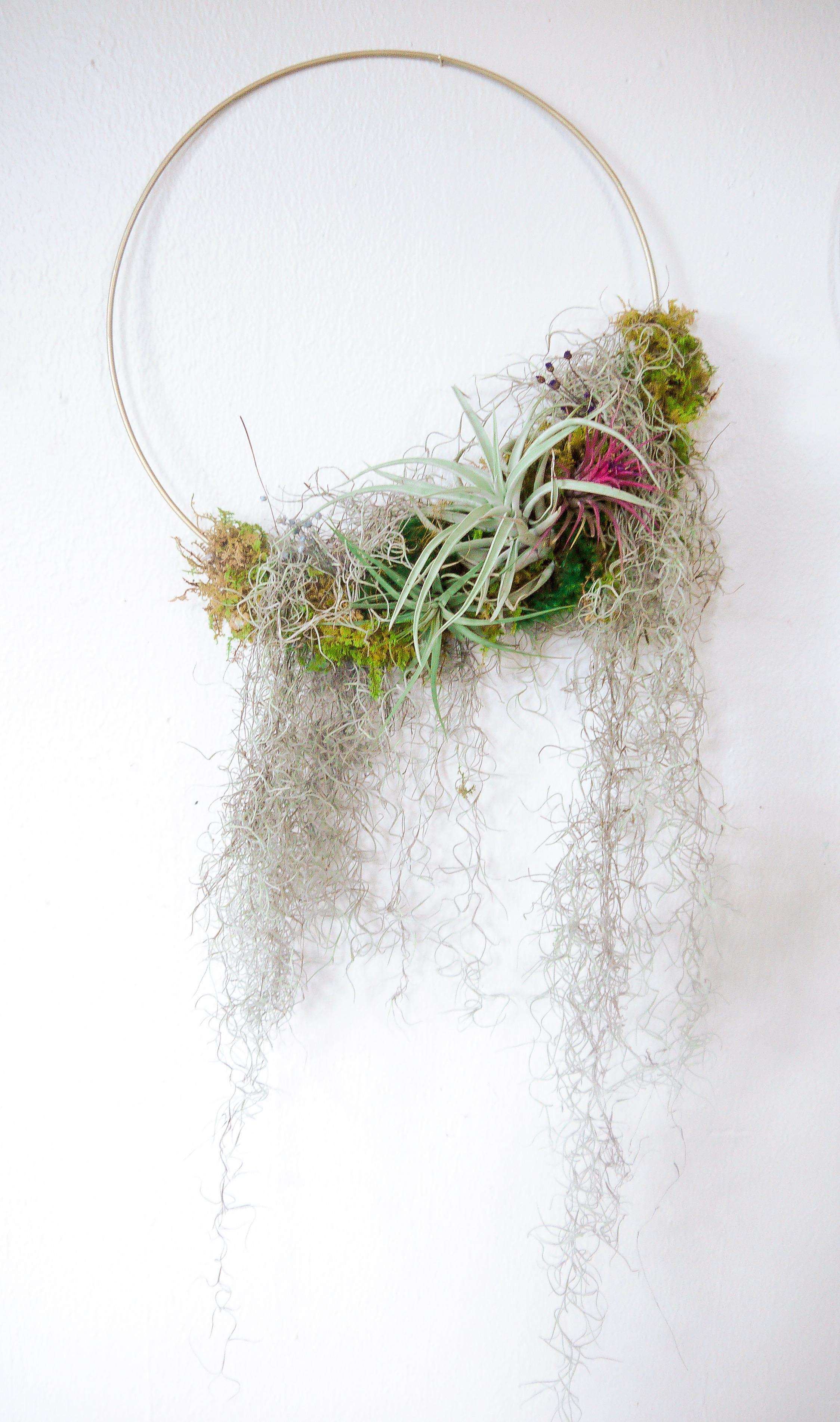 Air Plant Wreath w- Spanish Moss.jpeg