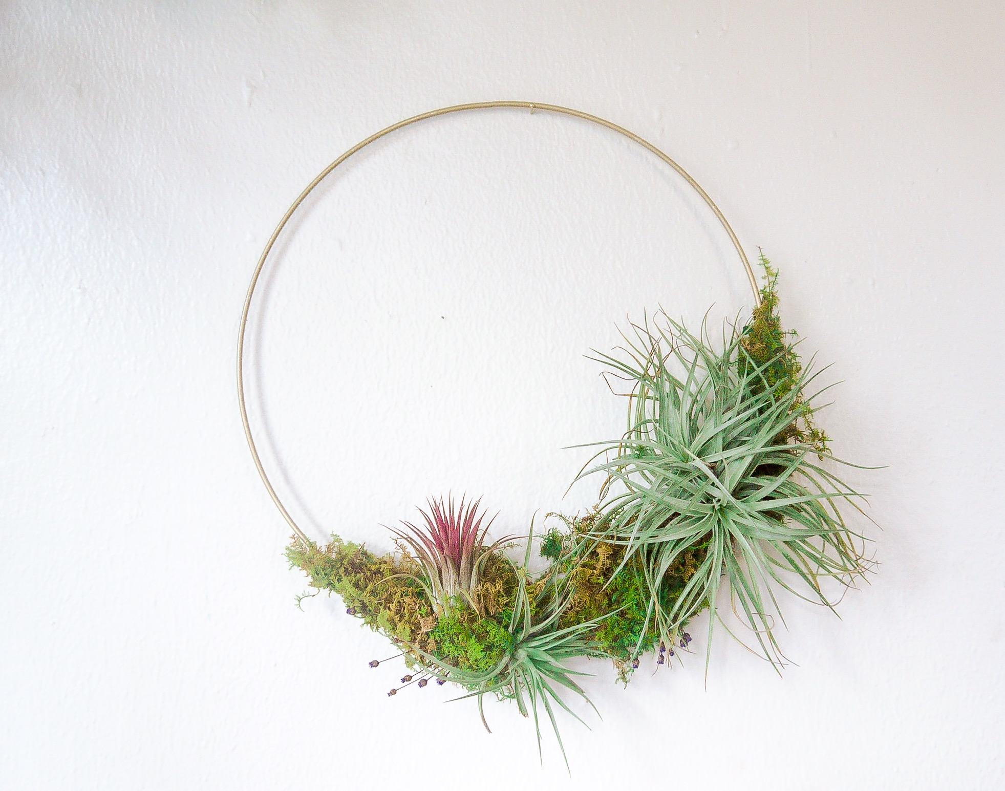 Tillandsia Wreath Workshop! - Craft a modern air plant wreath with us in the heart of the French Quarter at Hundred Acre Design! $60      December 20        6pm - 8pm