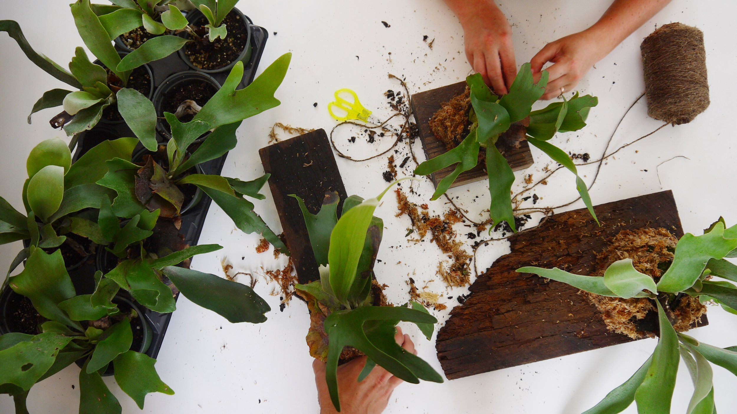 Staghorn Mounting Workshop - Join us for a Saturday of planting, hammering, crafting and learning.