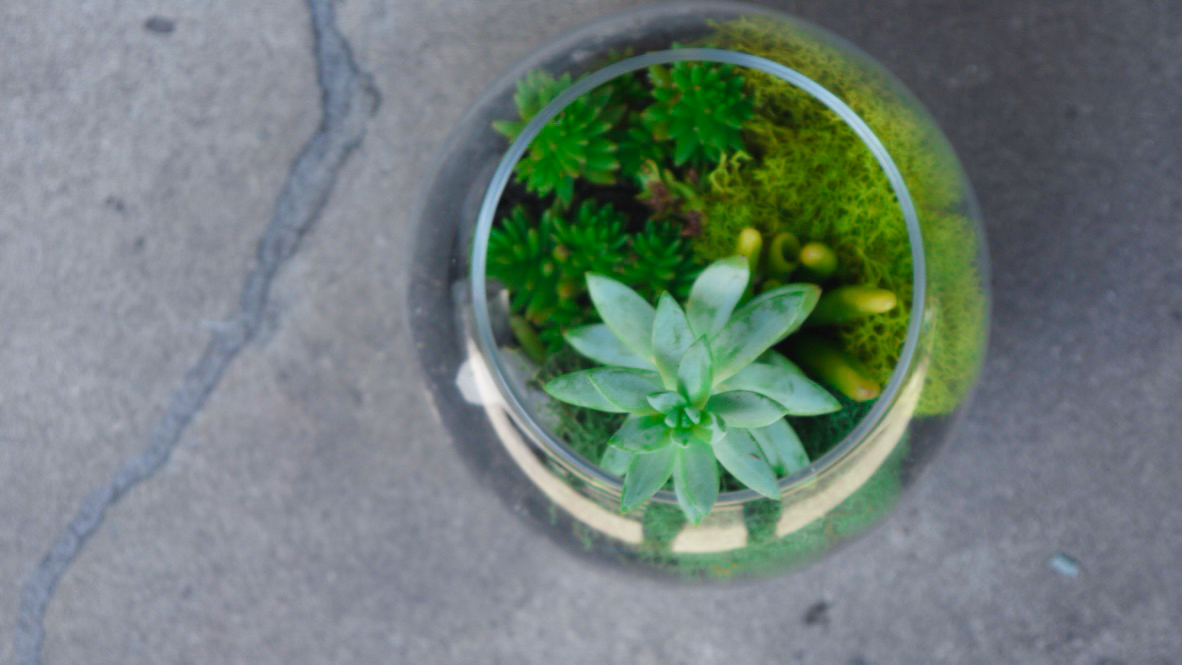Succulent + Crystal Terrarium FQ-15.jpg