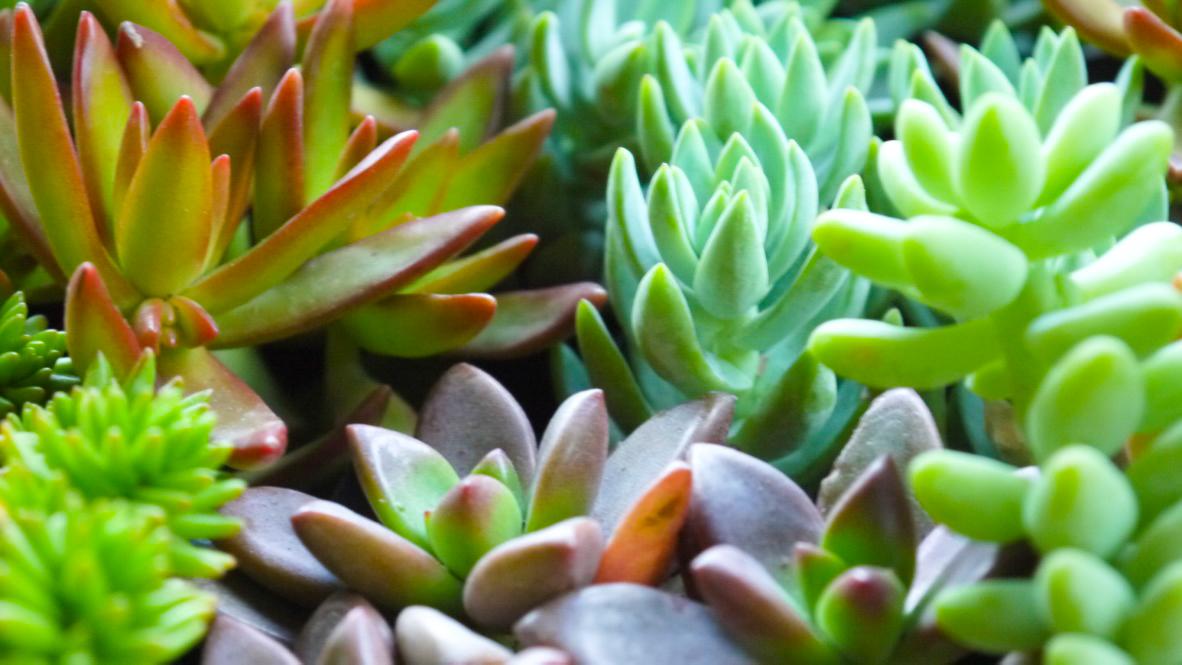 Succulent + Crystal Terrarium FQ-20.jpg
