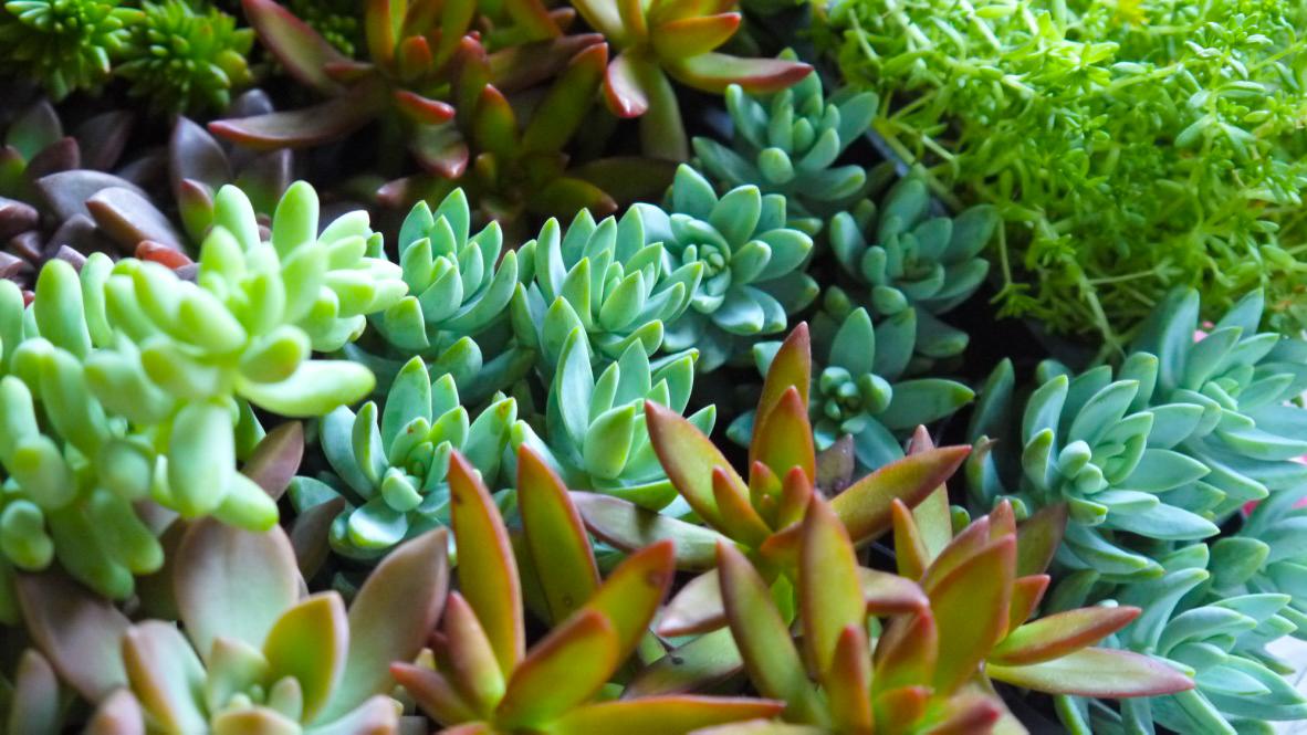 Succulent + Crystal Terrarium FQ-23.jpg