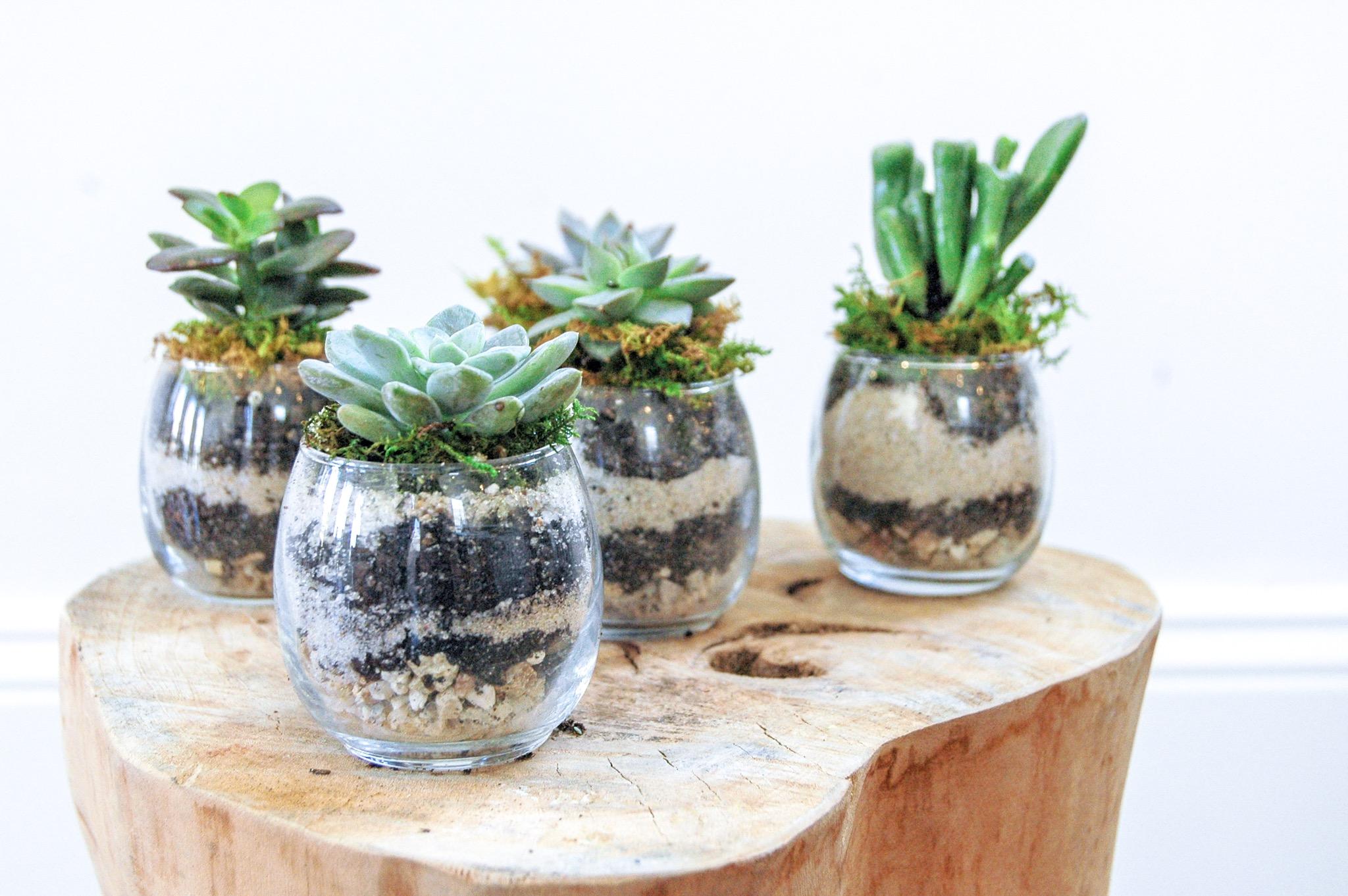 Plant Meditation - 9am - 9:30am  /  $15