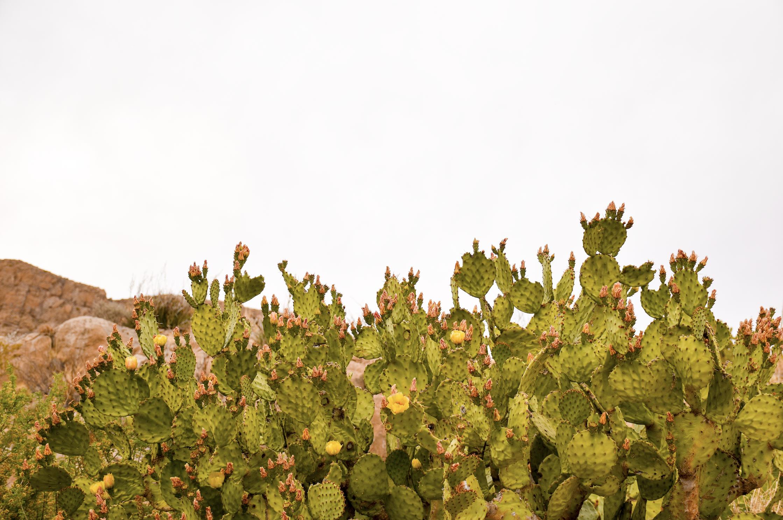 Luna Landmark: Cacti on Canal -