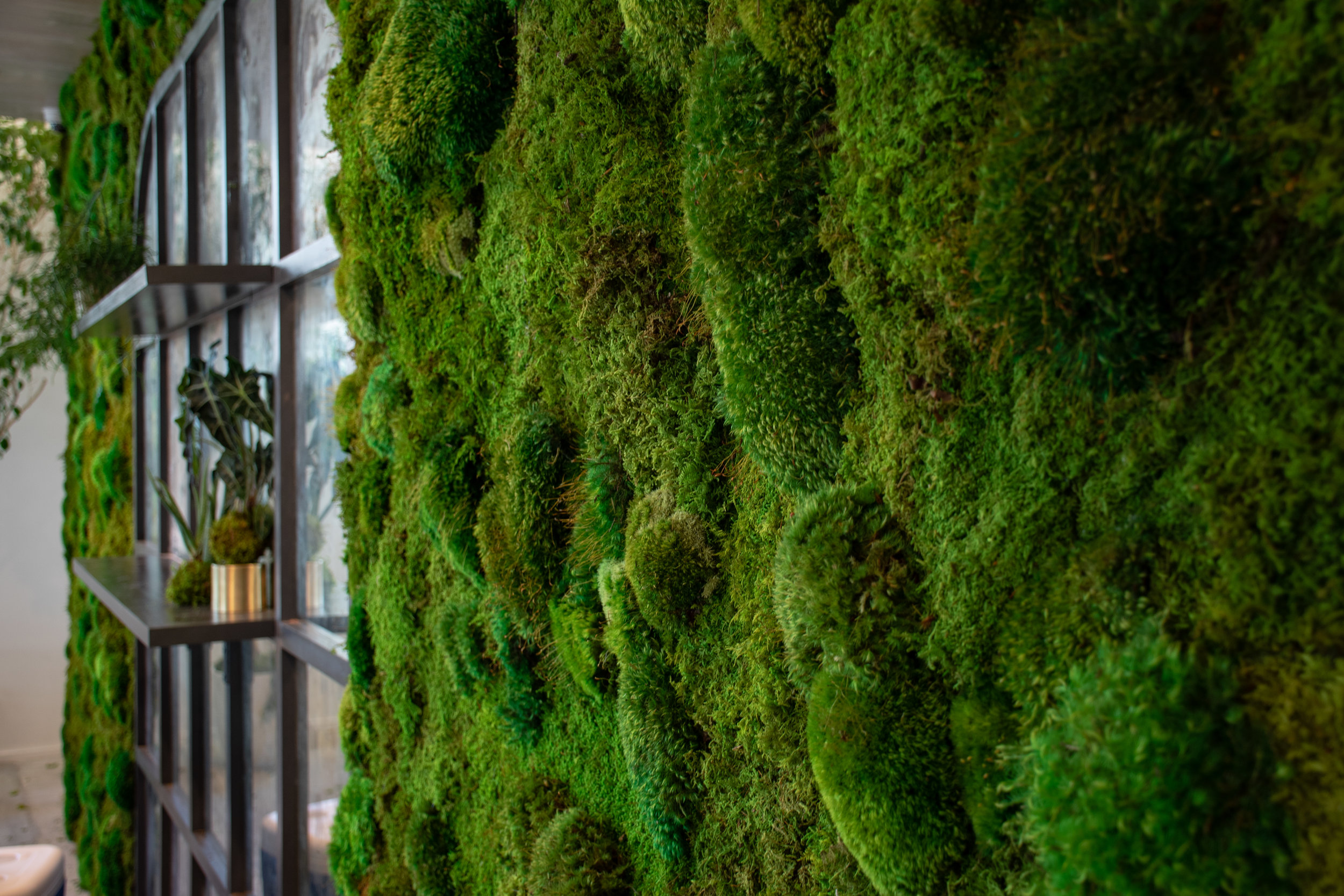Biophilia - An introduction to the theory and design principles that empower meaningful connection between people and nature