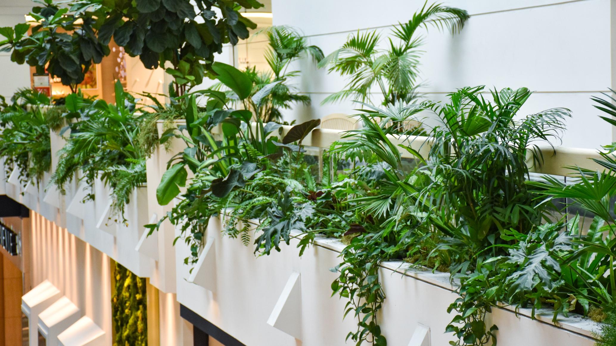 Interior Plantscaping -