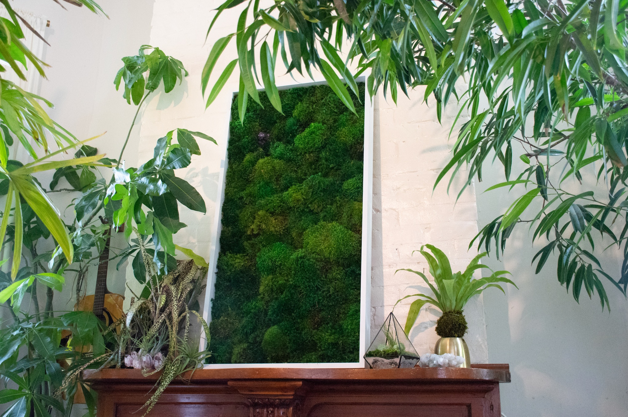 GROW A FOREST - High style, low maintenance plant curations that create instant impact and continued growth to your space.