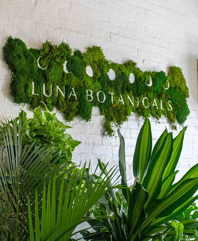 🌛🌕🌜Luna Botanicals 🍃 Luna is our shared last name and is Filipino for 'moon'. Botanicals means 'anything of the Earth'. We use natural elements for modern design that compels emotion. . . . As our artwork evolves and moves through different forms and phases, we always stay rooted in nature. The seven moons represent many things for us - the Crescent City, the seasons of nature and the cosmic design of it all. ✨ . . 🌱 Grow with us as we continue to evolve our business and bring original nature based art and branding concepts to New Orleans and beyond. . . . 🍃See this beauty at The Green Room @auctionhousemarket . . . #lunabotanicals #luna #lunamoss #nature #biophilia #biophilicdesign #moonphases #greenyourfeed #moss #planteriordesign #plantstyle #neworleansartist #secretsofgreen #plantsinfocus #bringtheoutsidein