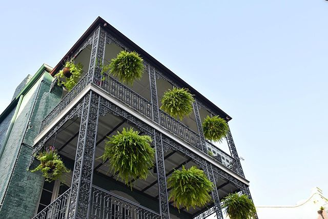 Vertical garden in the Central Business District 🌙🌿🌱 @cellardoornola . . . We are so fortunate for the opportunities to adorn historic New Orleans architecture with life and movement through #biophilia 💫 . . . #stellardesign #rootedinnature #webringthegreen #plantsmakepeoplehappy #greenyourfeed #plantsinfocus #plantdesign #botanicalbeauty #growth #landscapearchitecture #landscaper #landscapedesign #gardendesign #outdoorspaces #growforit #followyournola #thatlacommunity #beyondbourbonstreet #neworleansdesign #neworleansarchitecture
