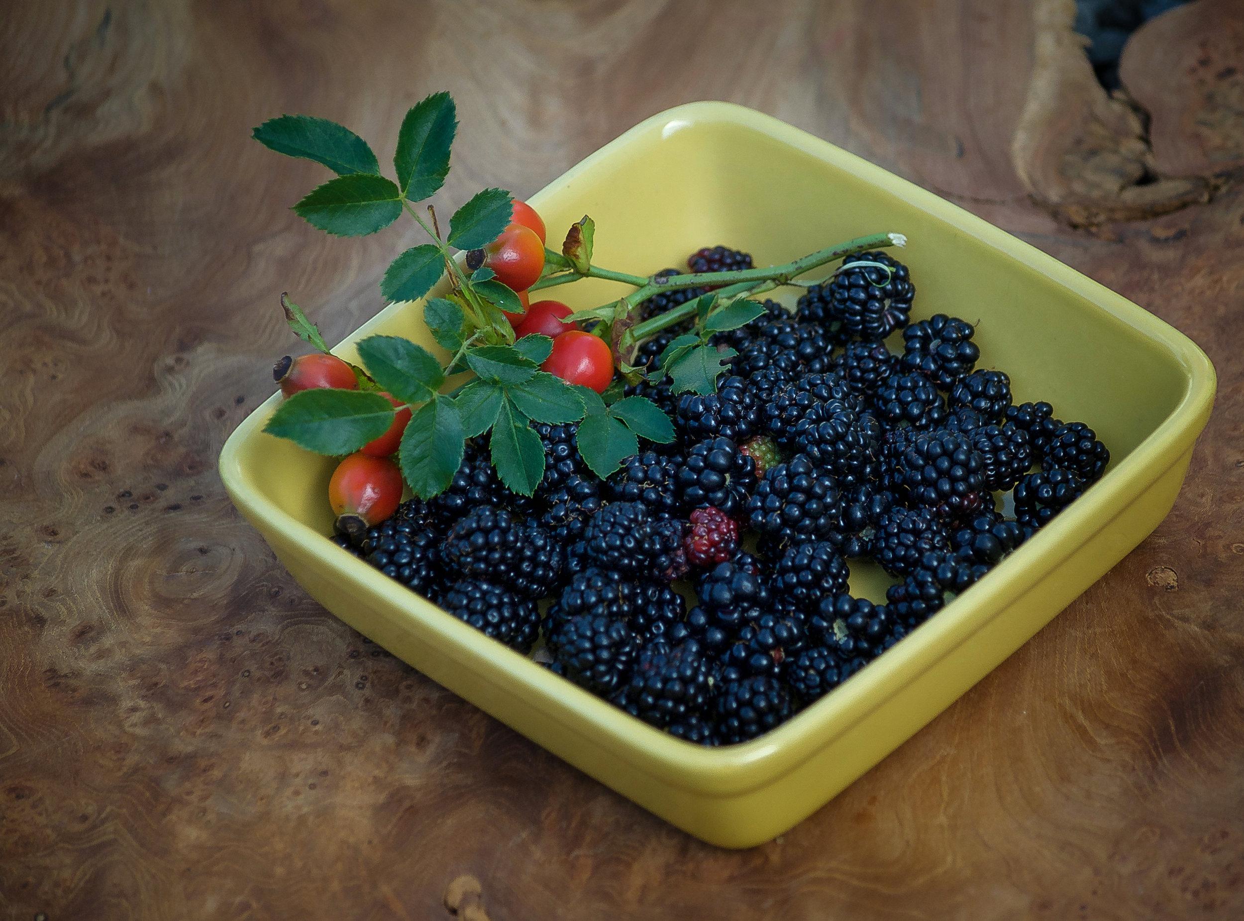 Blackberry Harvest.