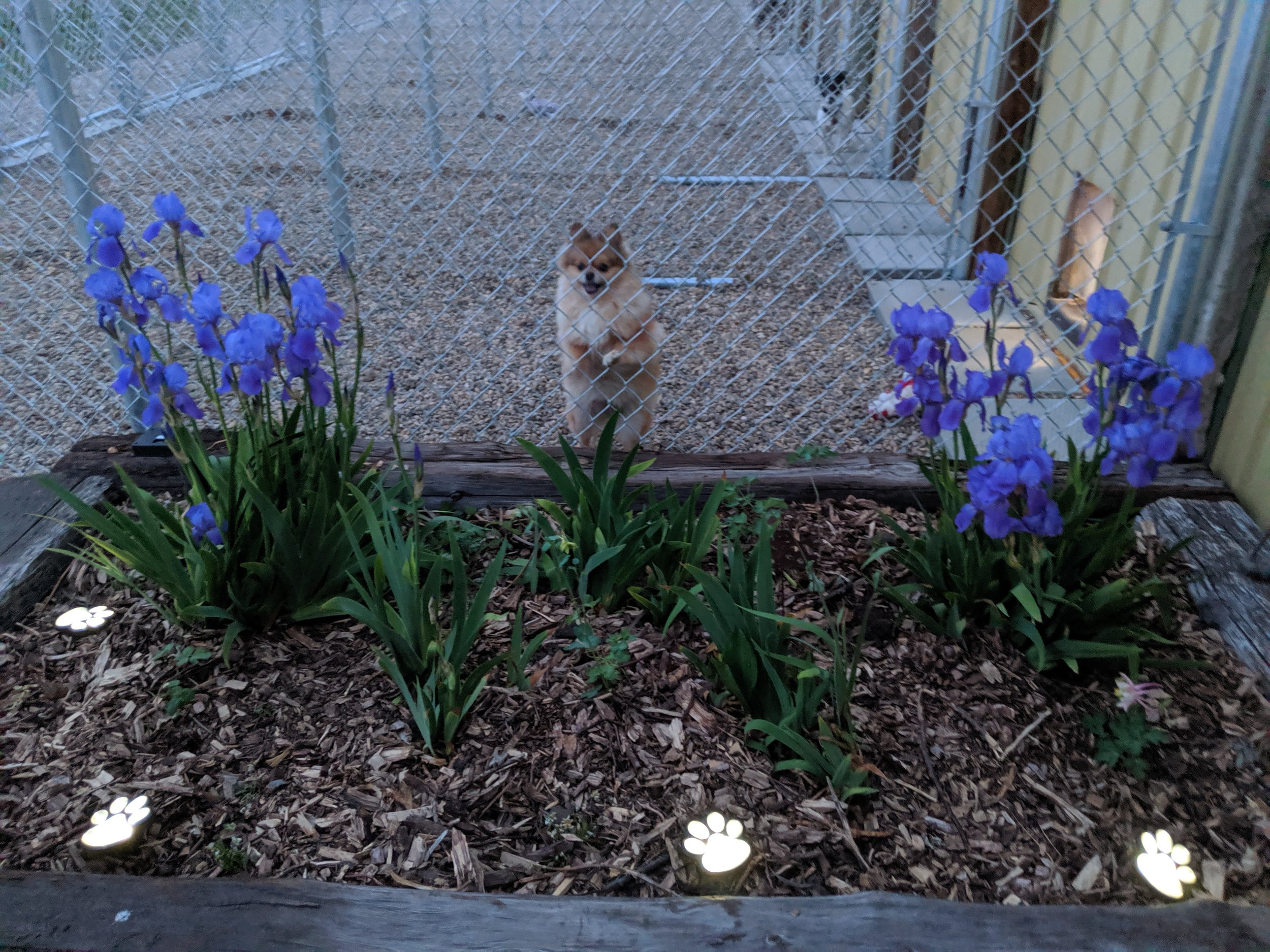 Sadie approves the new solar lights