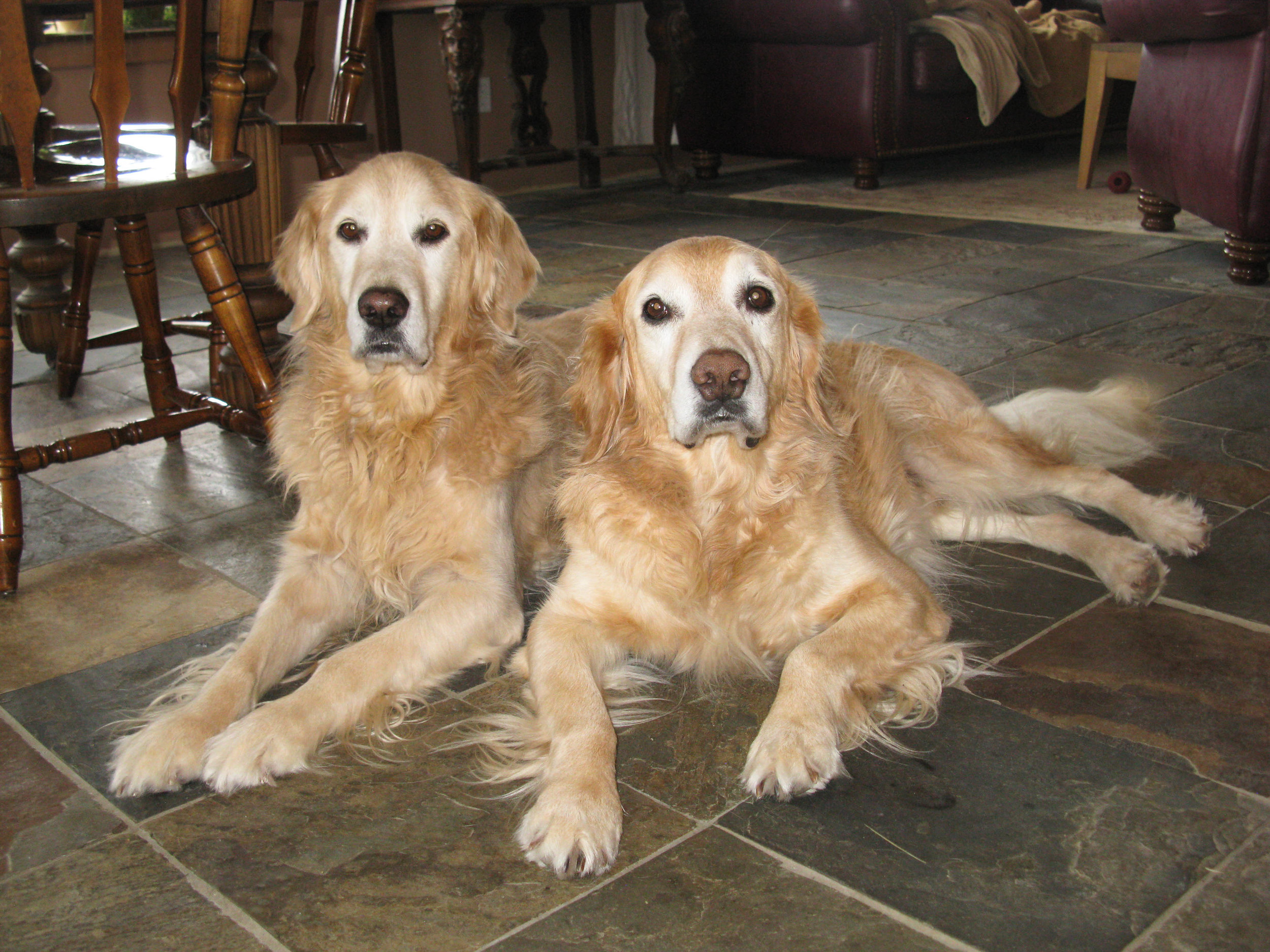 A well-trained dog is a joy to live with. Daisy and Buddy.