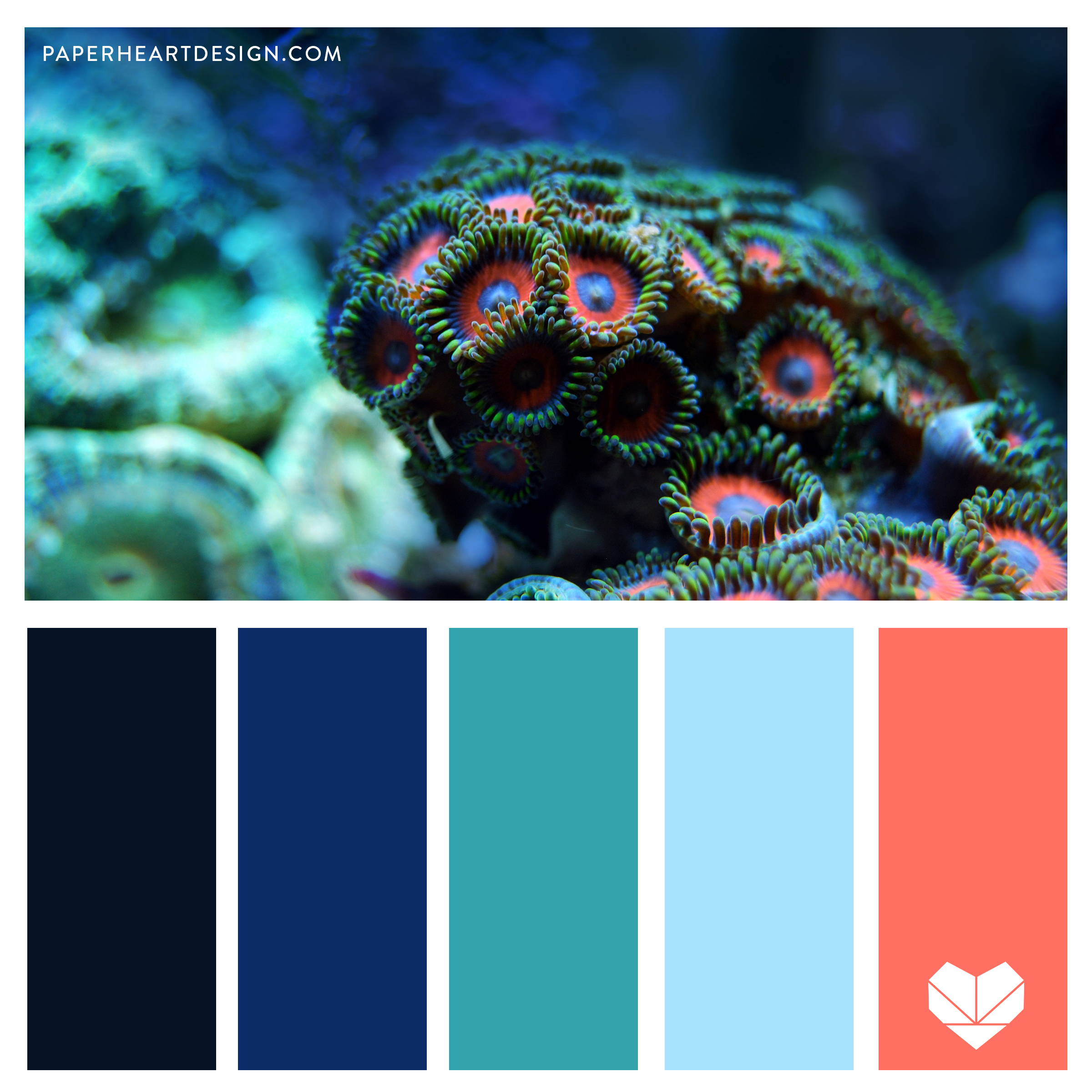 Ocean Vibes. Coral, Blue, 2019 Color of the Year, Pantone