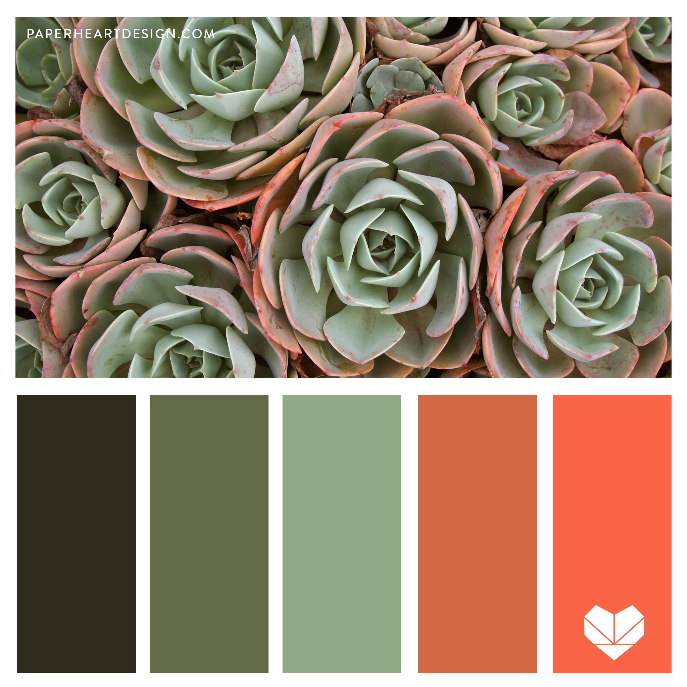 Succulents, Color Palette, Pallet, Color Scheme, Coral, Green, Gray, Olive,