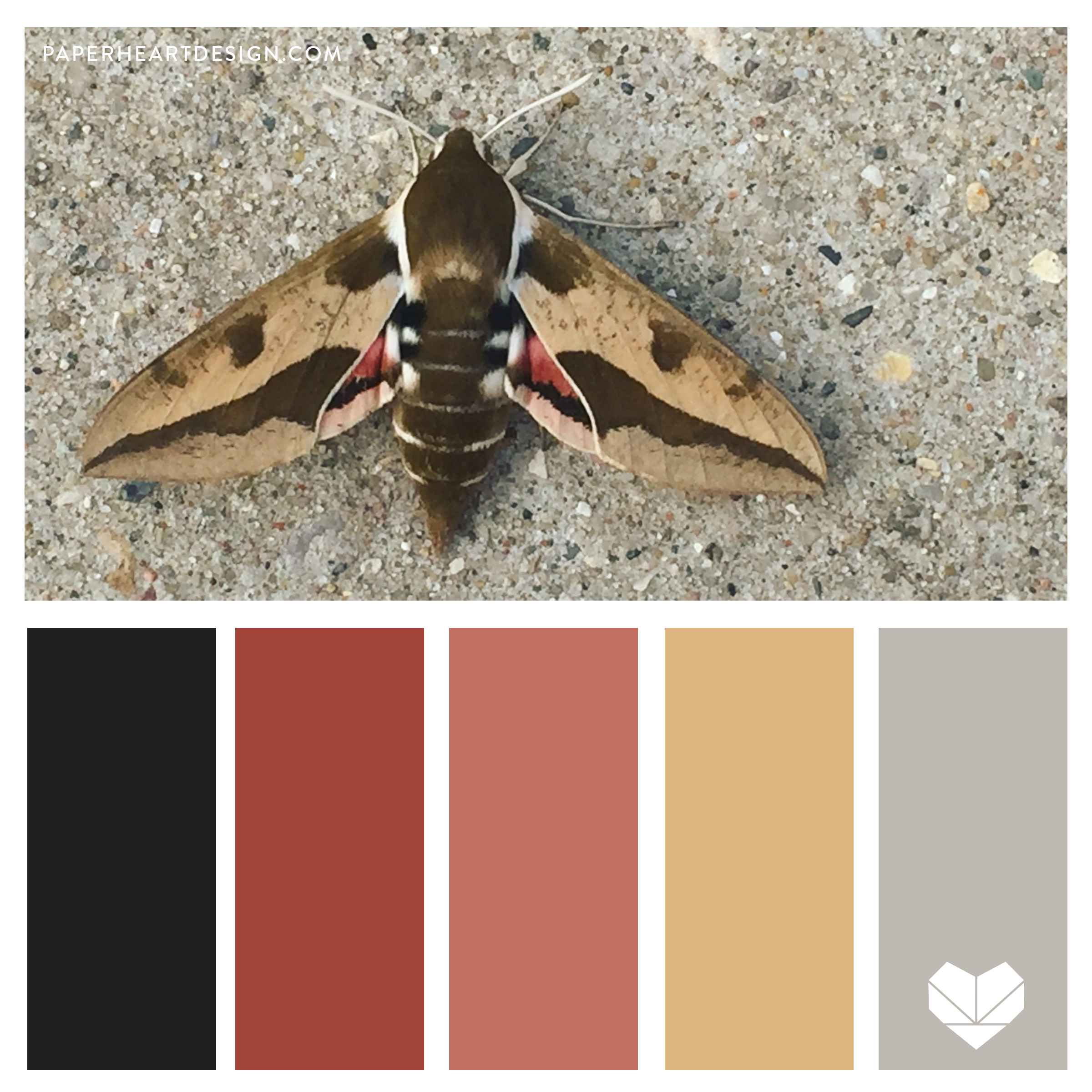 Moth Spurge Hawk Moth.jpg