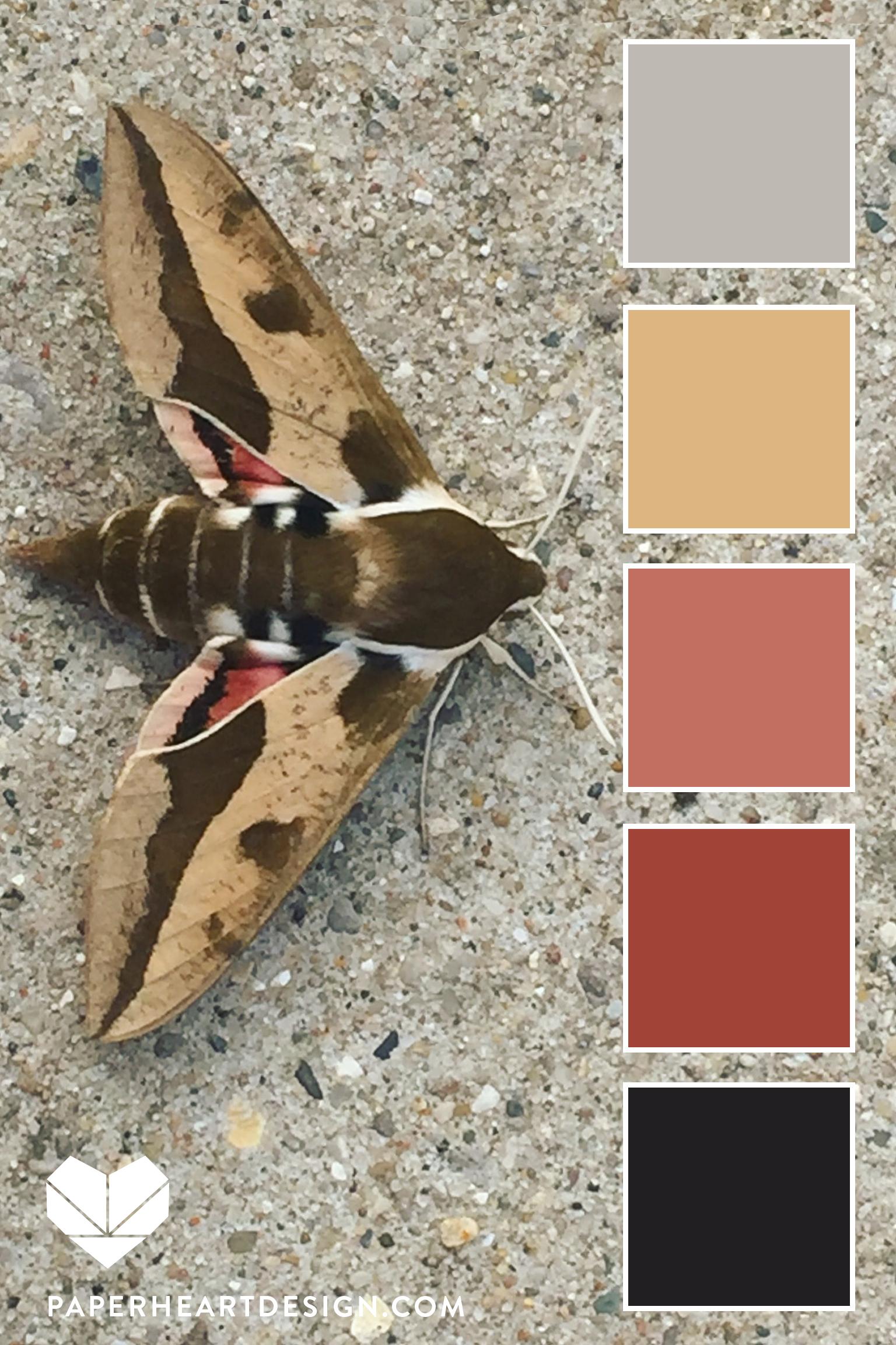 Moth Spurge Hawk Moth VERT.jpg