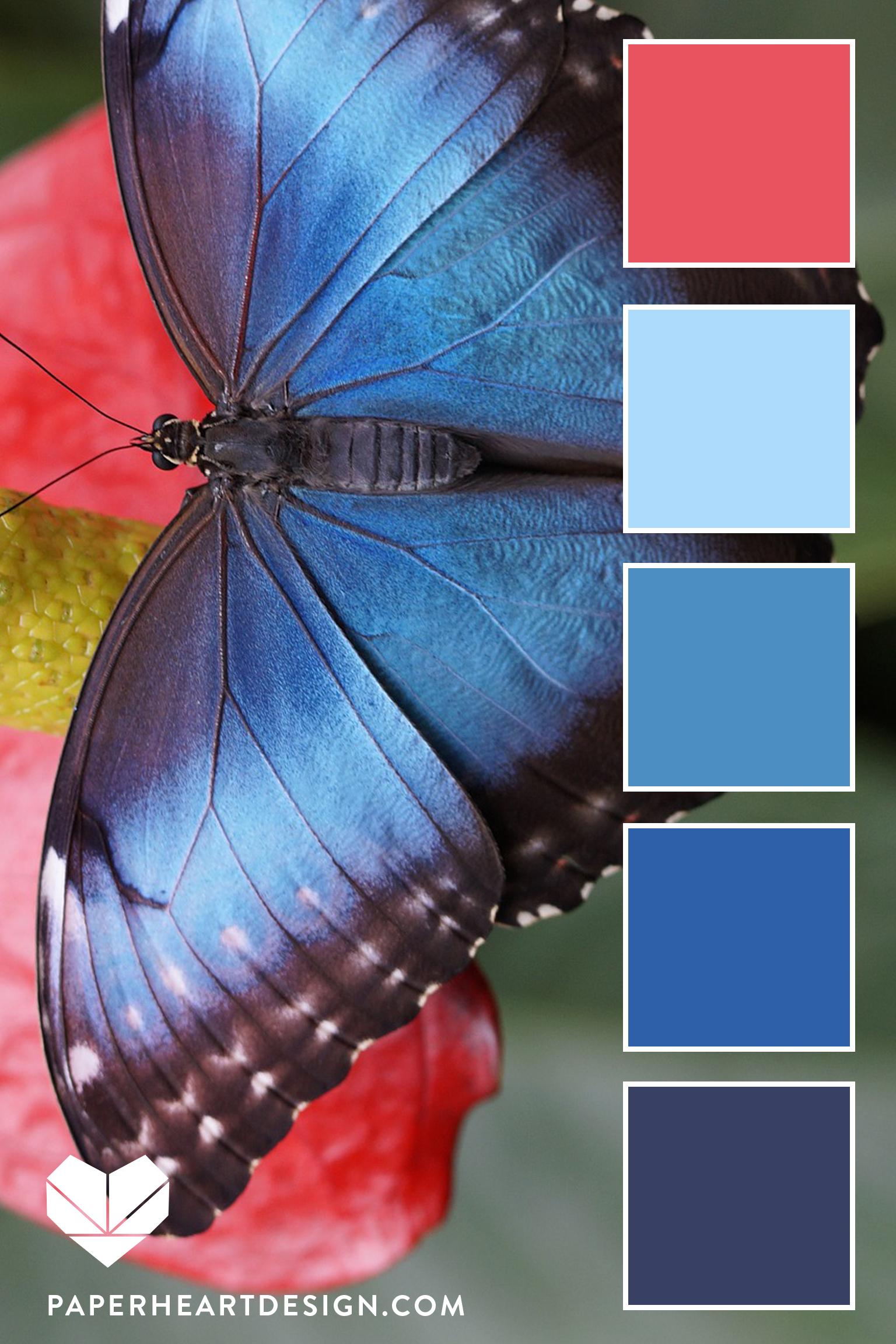 Blue Morpho Vert.jpg