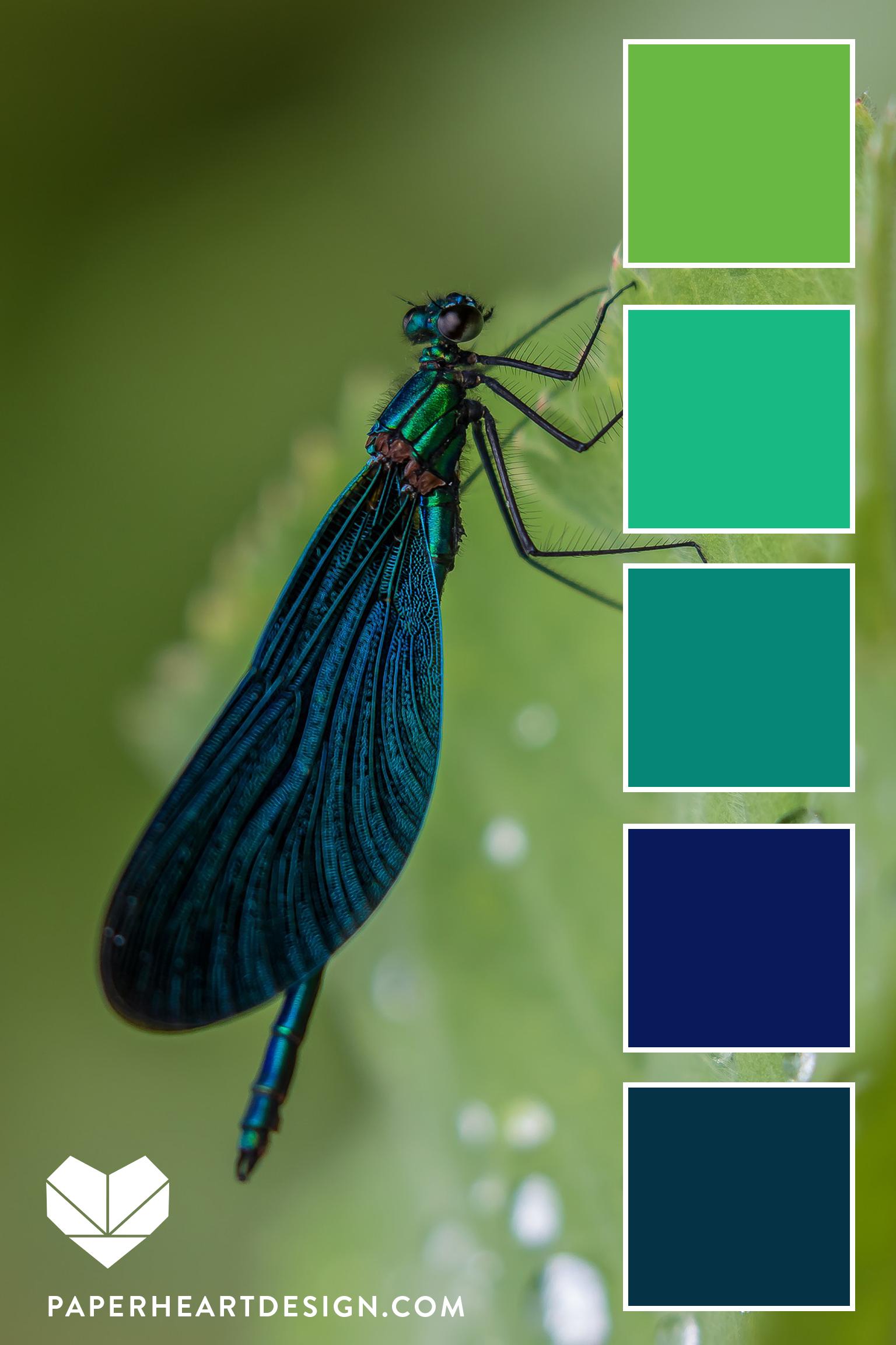 Dragonfly Vert.jpg