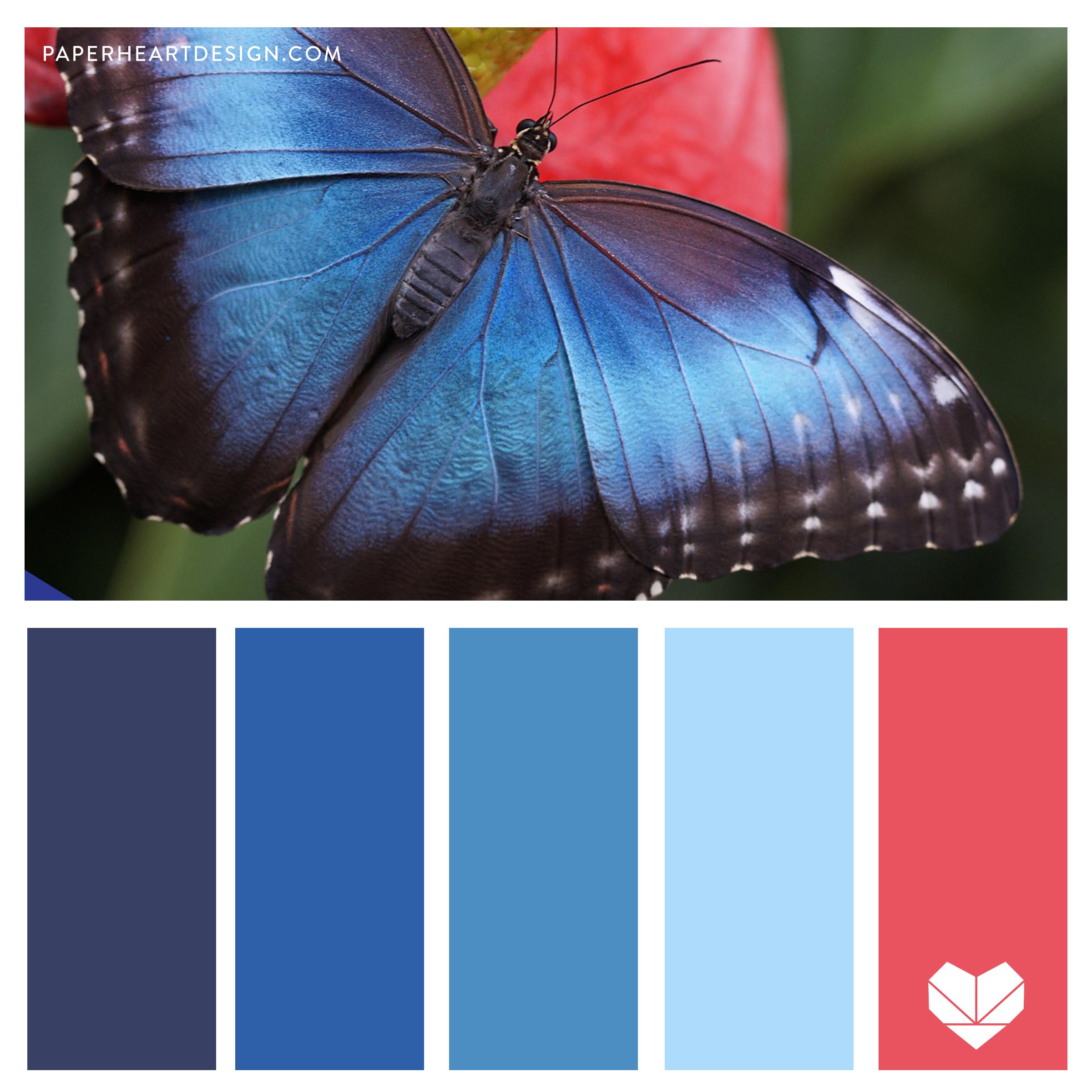 Butterfly Blue Morpho.jpg