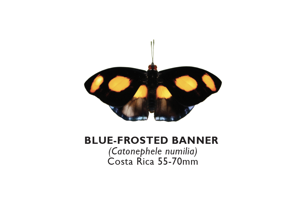 Blue-Frosted Banner.png