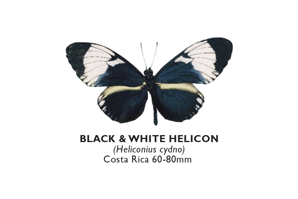 Black & White Helicon.png
