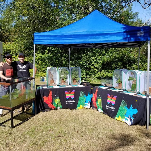 Today we are participating in the CRD Going Buggy event 11am – 2pm at Elk/Beaver Lake! Come on down and learn about amazing insects from several different organizations! We are displaying some amazing tropical insects and native aquatic invertebrates!  Info talks will be held during the whole event.  https://www.crd.bc.ca/about/events/event/2019/07/25/default-calendar/going-buggy---drop-in-event-all-ages victoriabutterflygardens⁠⠀ •⁠⠀ •⁠⠀ •⁠⠀ •⁠⠀ •⁠⠀ #vbg #insectarium #victoriabc #yyj #explorevictoria #explorevancouverisland #supportlocal #pnw #pacificnorthwest #westcoastbestcoast #butterfly #hercules #herculesbeetle #butterflies #photooftheday #coloursofnature #naturebeauty #nature_brilliance #jungle #iguana #flamingos #duck #ExploreVictoria #ShareVancouverIsland #VancouverIsland⁠⠀