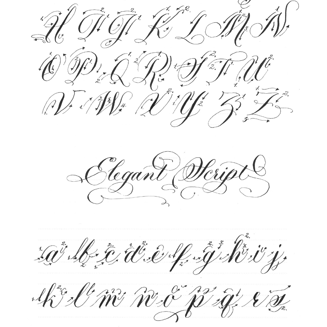 Elegant Script Pointed Pen Calligraphy Ductus   This ductus shows the stroke sequence to write out what I call 'elegant script.' This elegant hand is a very casual hand based in copperplate. Use the x-Height line download sheet to practice. Remember to keep the body of all minuscule letters within the x-Height. Take the file to your print shop and have it printed on plastic to use on your light table.
