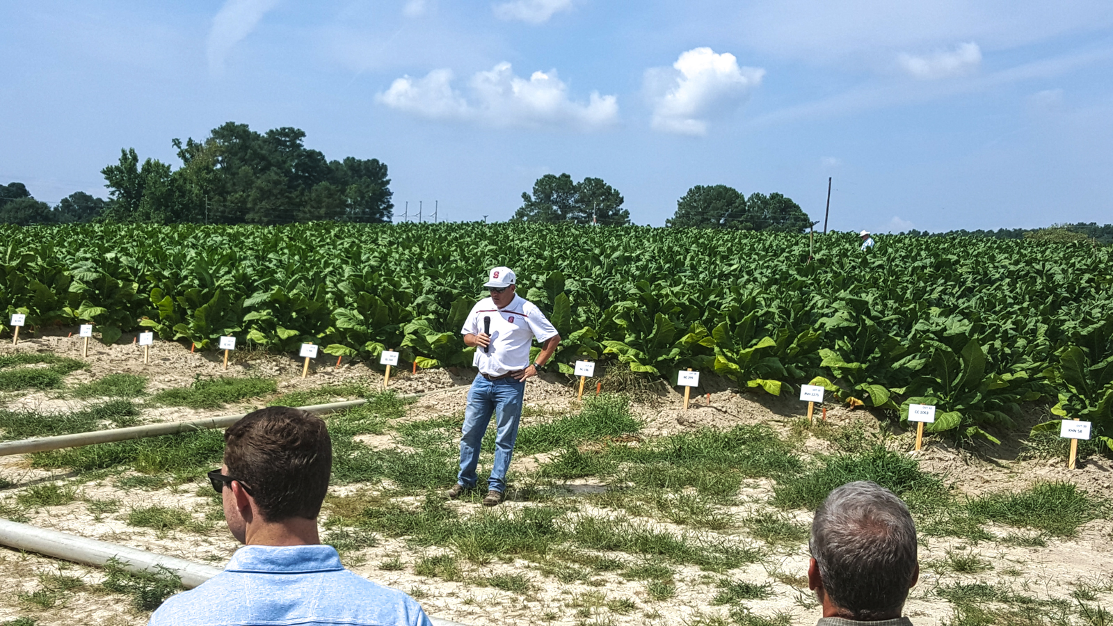 2017 Dr Loren Fisher Professor of Crop Science and Extension Tobacco Specialist.                                       Oxford Research station_wb.jpg