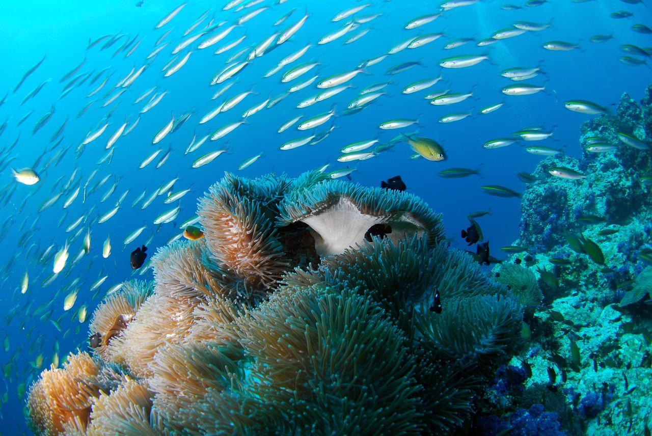 diving-689825_1280.jpg