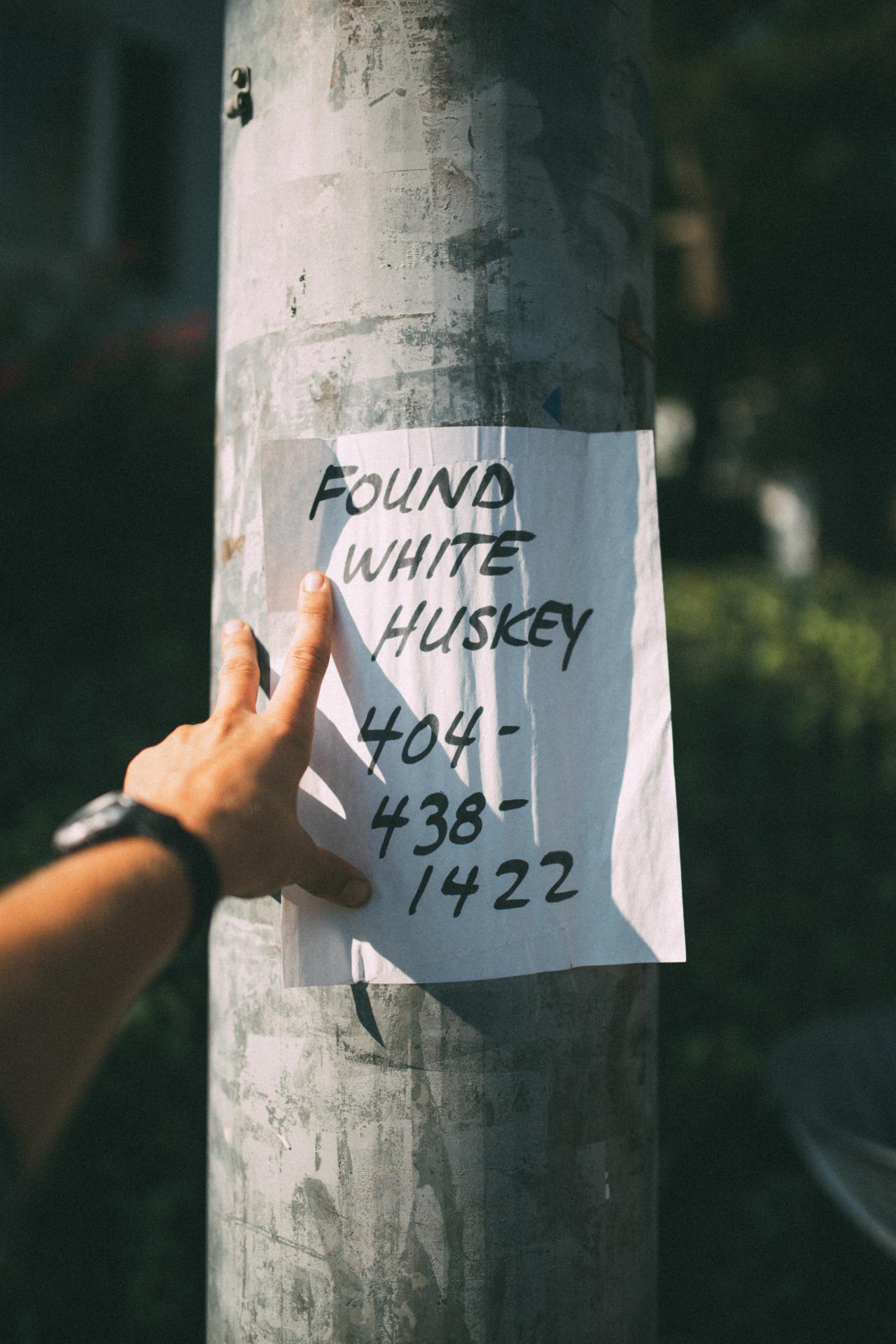 has anyone from Atanta, GA lost a white huskey?